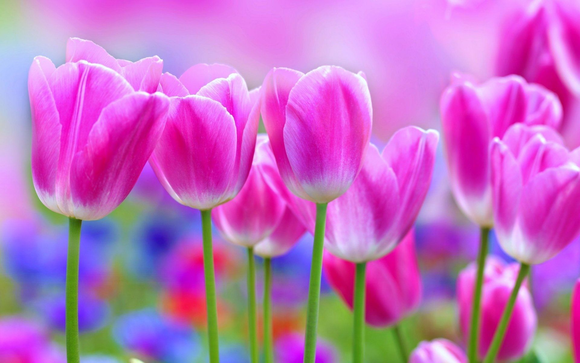 Pretty Flowers Wallpapers Top Free Pretty Flowers Backgrounds