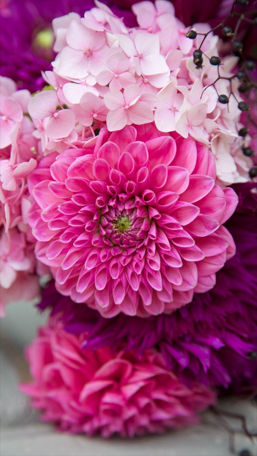 Flower Phone Wallpapers Top Free Flower Phone Backgrounds