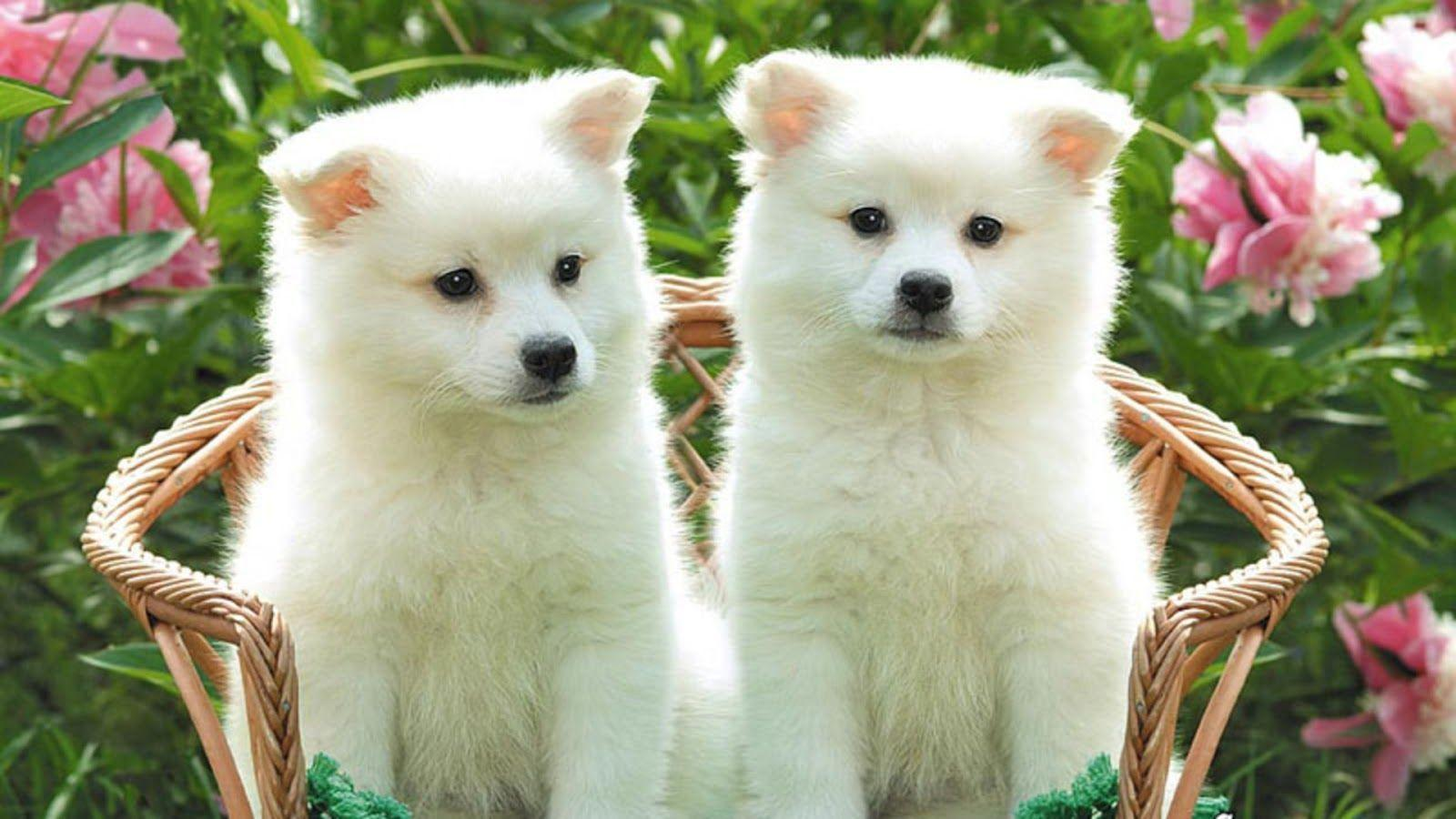 Beautiful Dogs Wallpapers Top Free Beautiful Dogs Backgrounds Wallpaperaccess