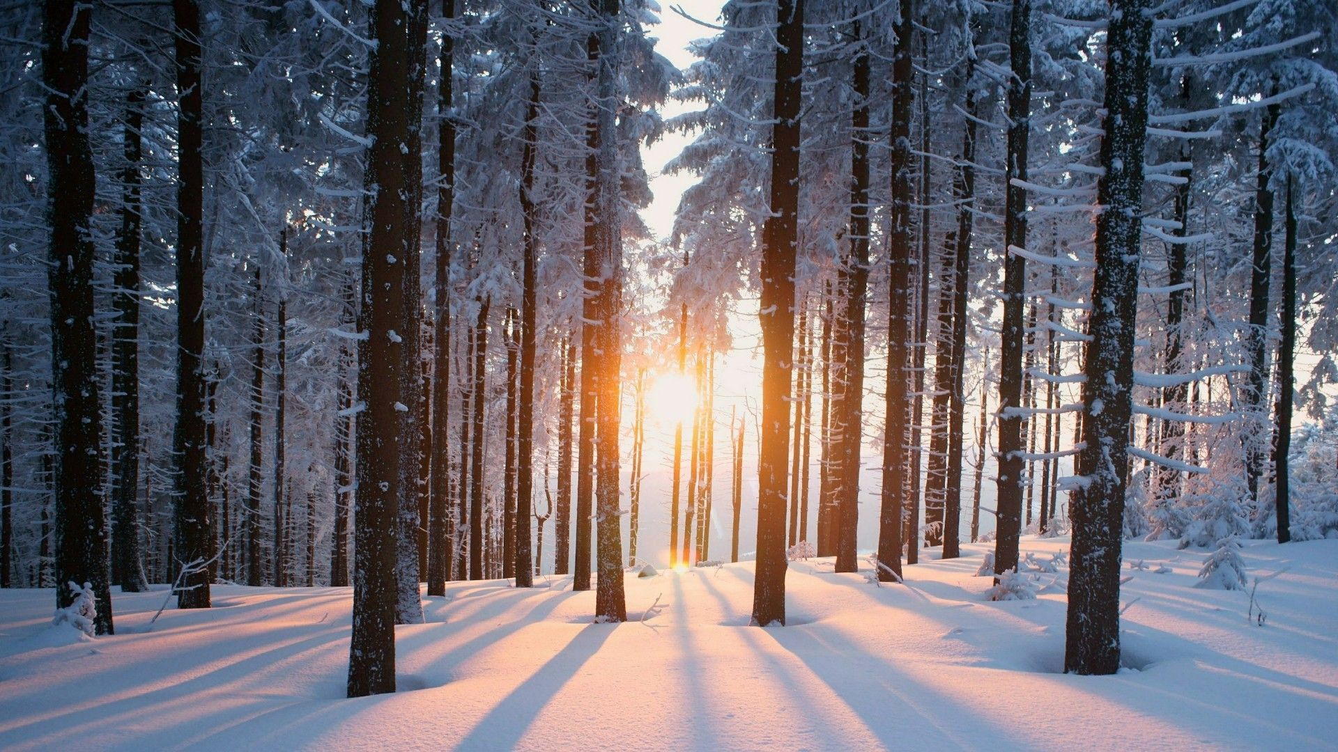 Snowy Forest Wallpapers Top Free Snowy Forest Backgrounds