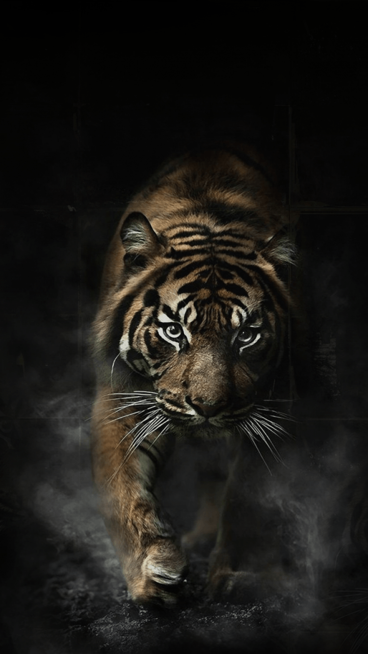 Tiger Phone Wallpapers Top Free Tiger Phone Backgrounds