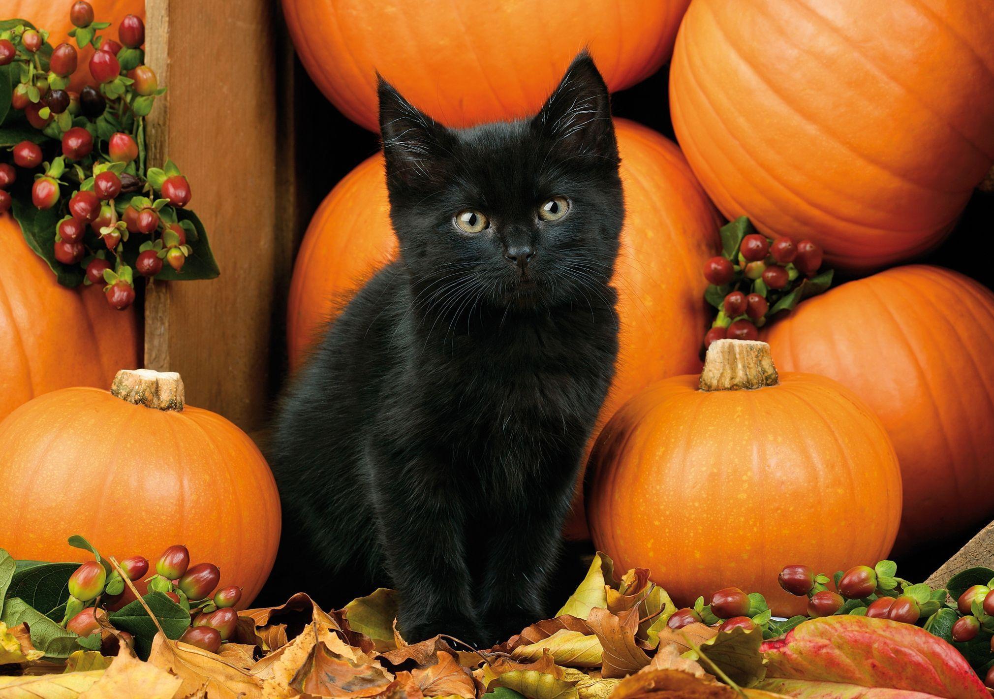 Cute Black Cat Halloween Wallpapers Top Free Cute Black Cat Halloween Backgrounds Wallpaperaccess