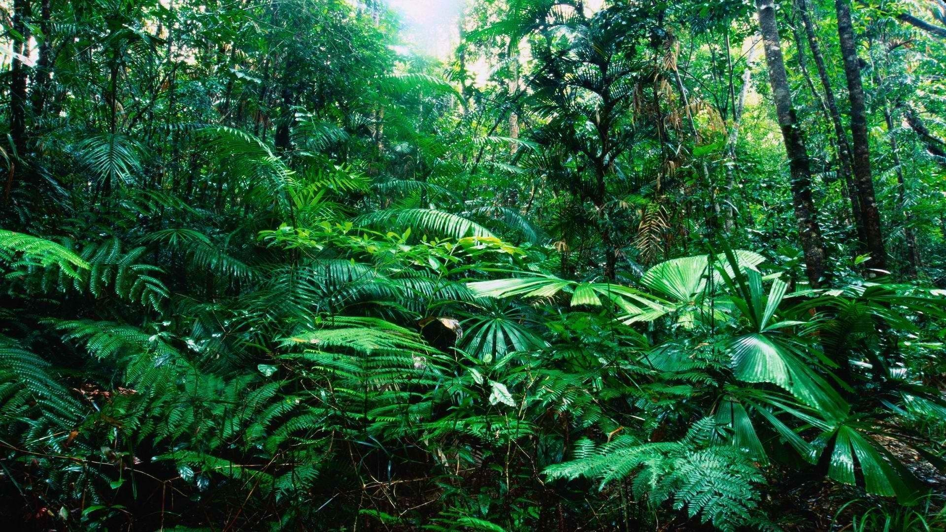 Tropical Forest Wallpapers Top Free Tropical Forest