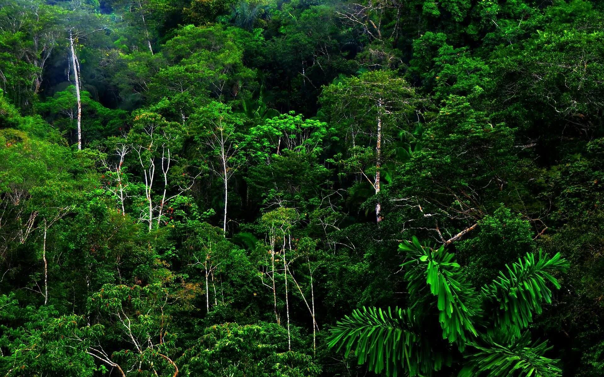 Rainforest Wallpapers Top Free Rainforest Backgrounds