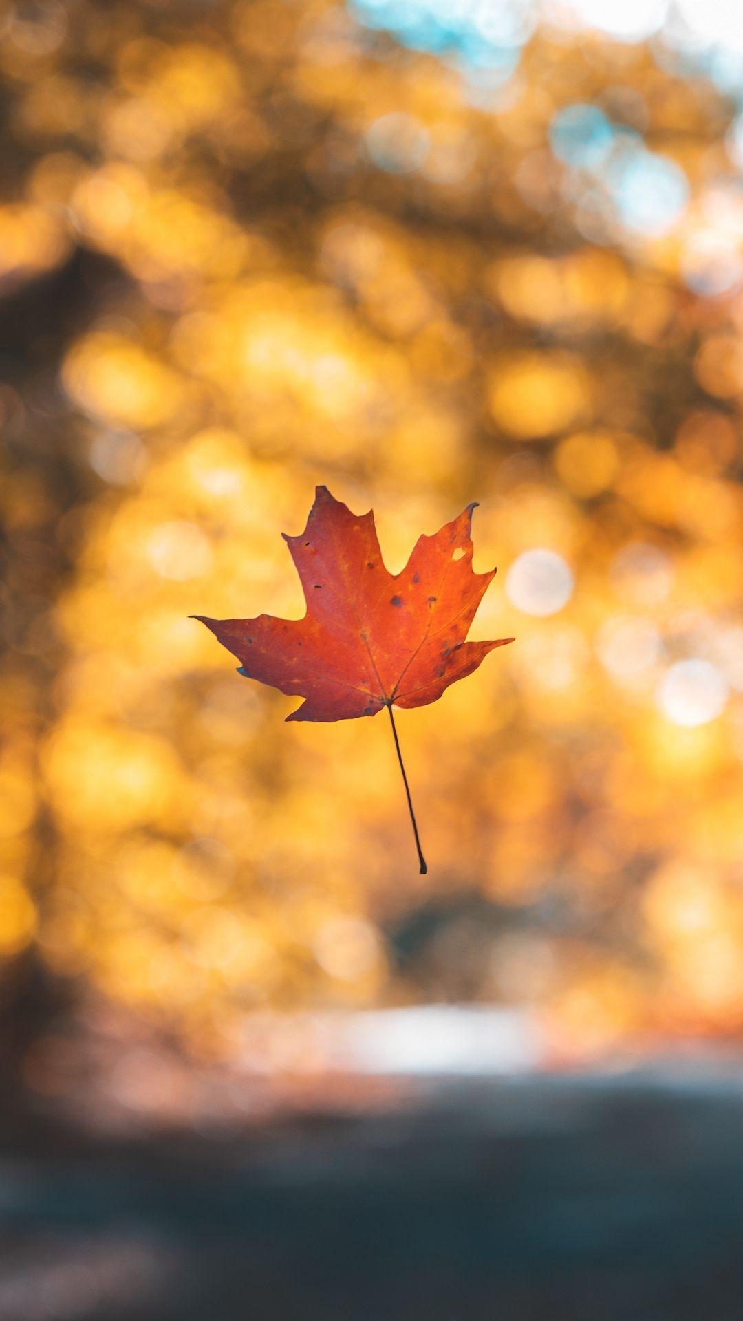 Minimalist Autumn Wallpapers - Top Free Minimalist Autumn ...