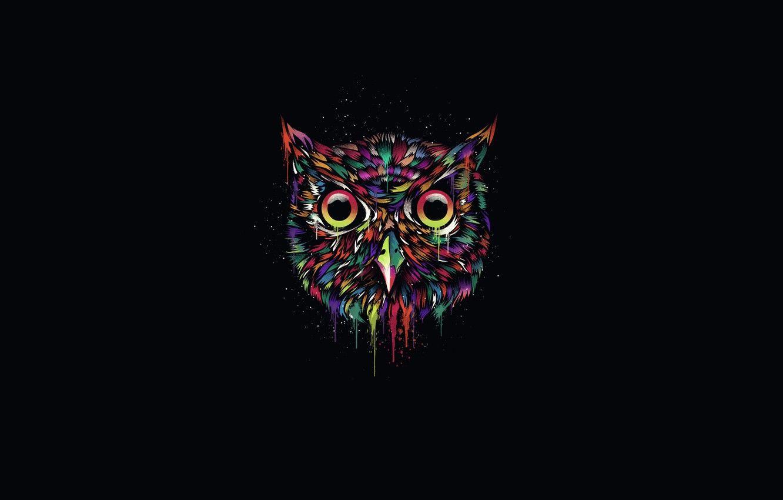 Minimalist Owl Wallpapers Top Free Minimalist Owl Backgrounds Wallpaperaccess