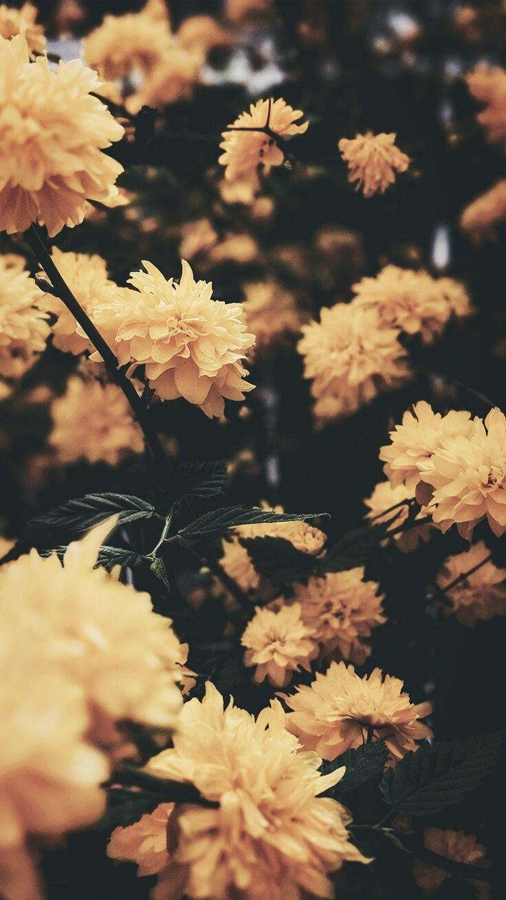 Aesthetic Flowers Wallpapers Top Free Aesthetic Flowers