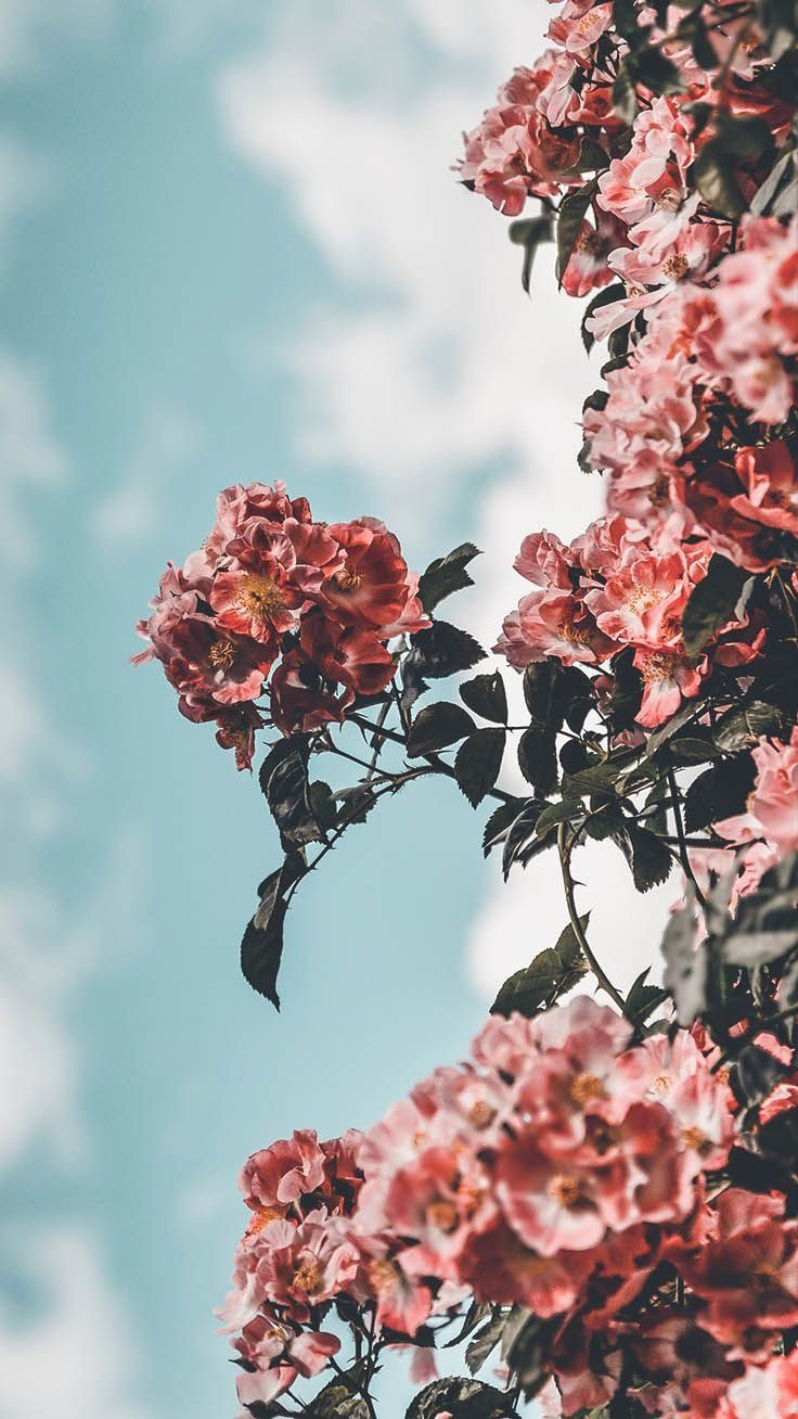Flower Aesthetic Wallpapers Top Free Flower Aesthetic