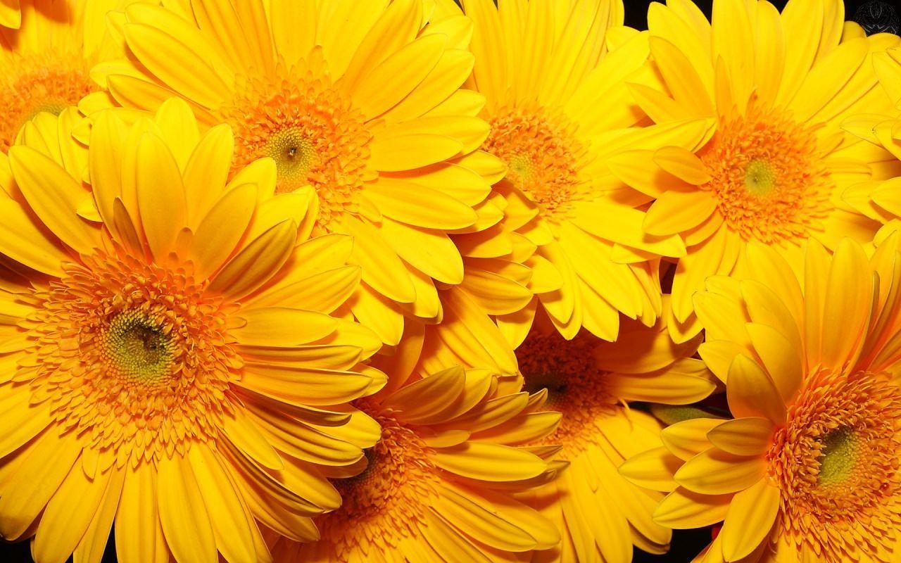 Yellow Vsco Laptop Wallpapers Top Free Yellow Vsco Laptop