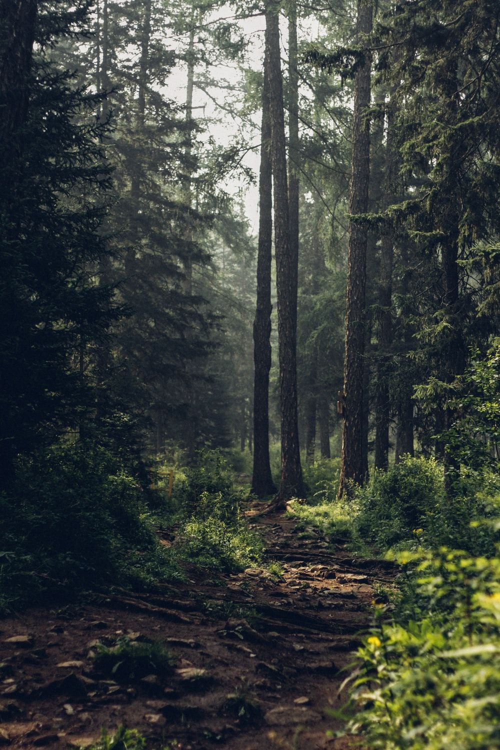 Forrest Wallpapers Top Free Forrest Backgrounds Wallpaperaccess