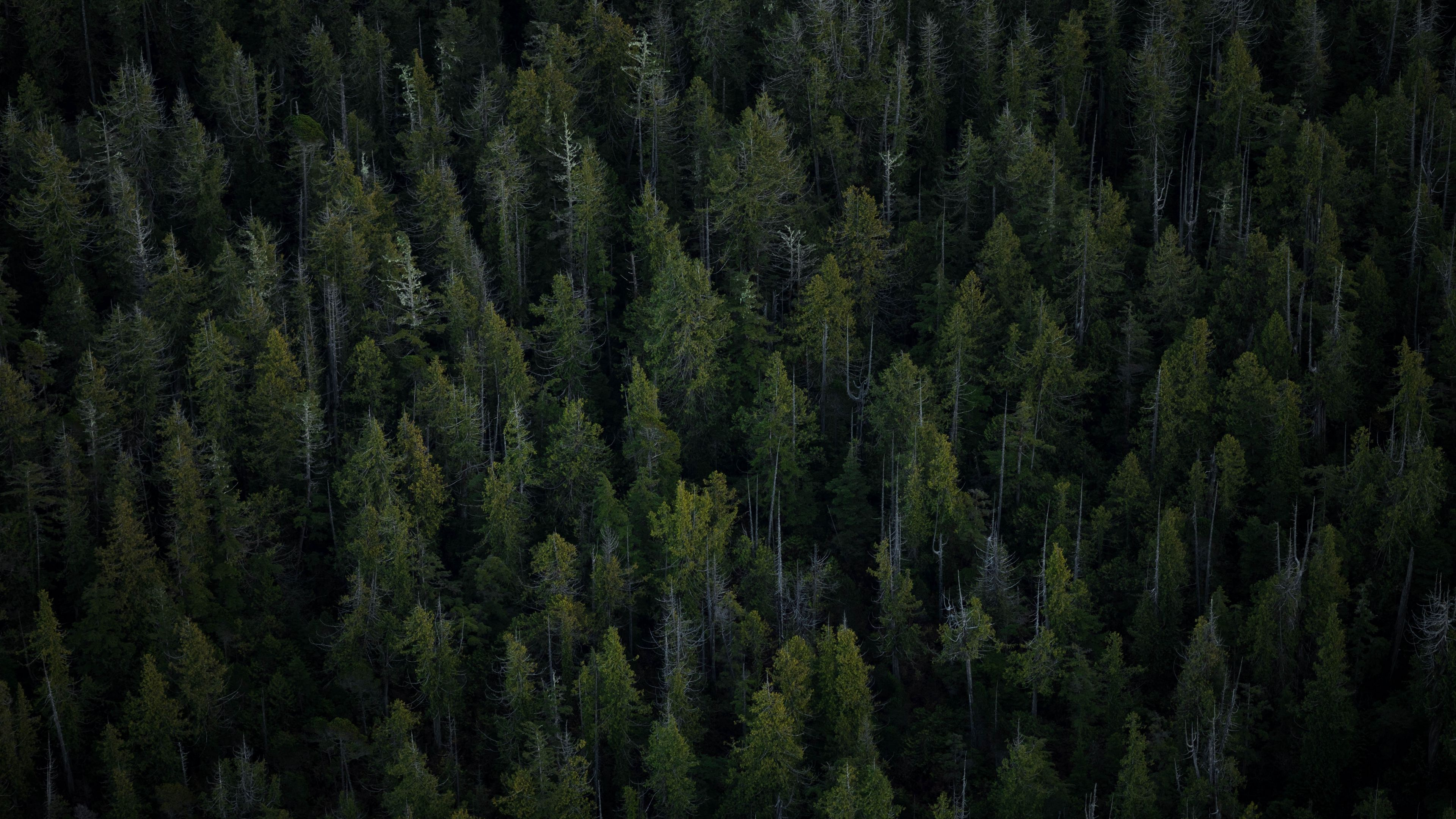4K Forest Wallpapers - Top Free 4K Forest Backgrounds ...