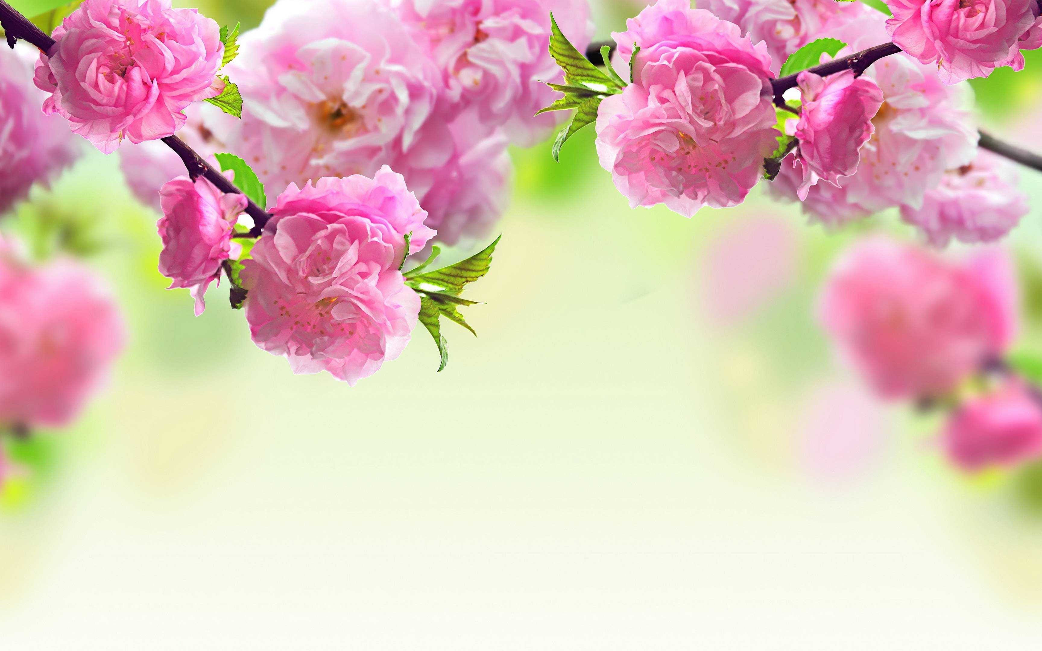 4k Flower Wallpapers Top Free 4k Flower Backgrounds Wallpaperaccess