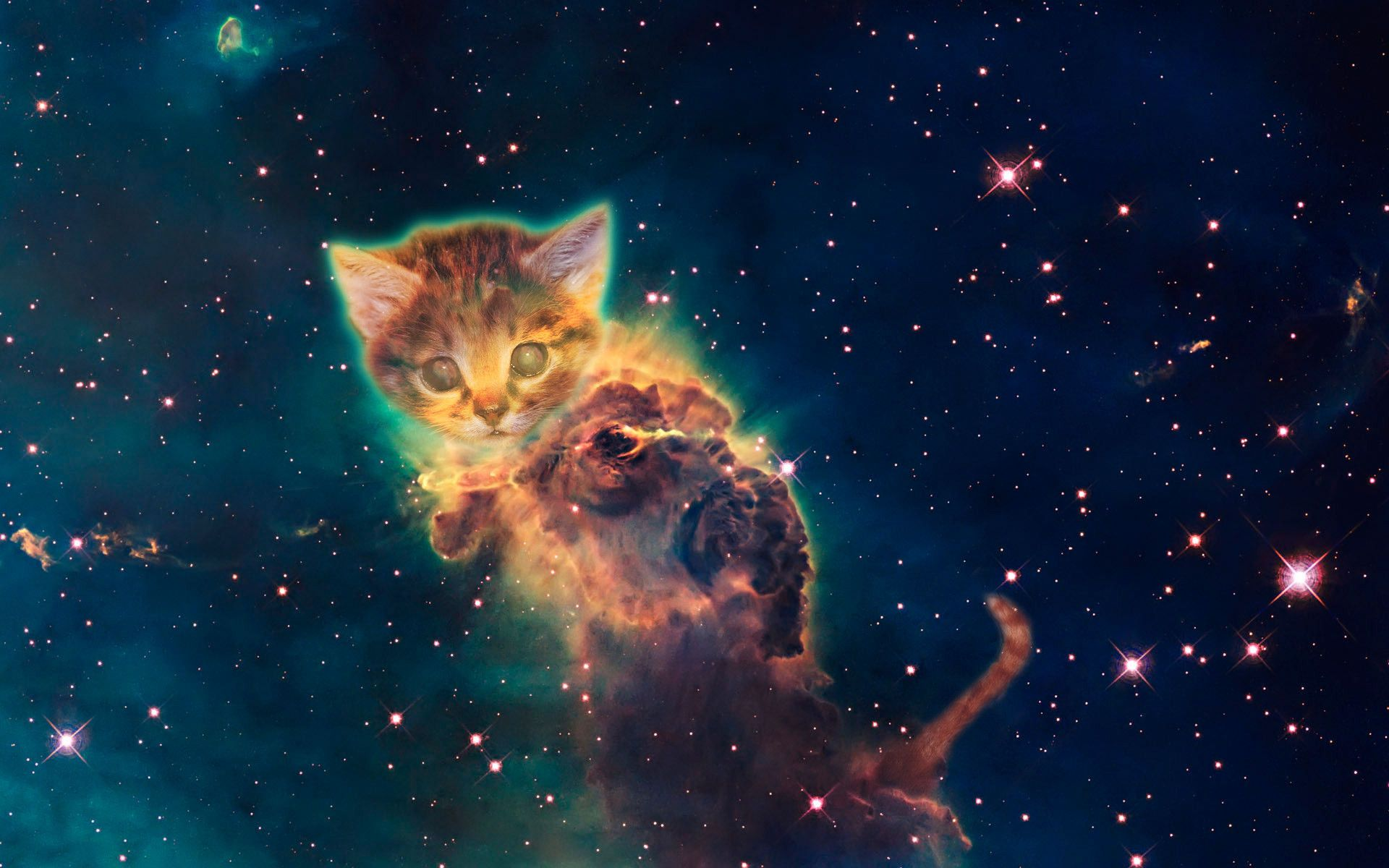 1920x1200 Galaxy Cat Wallpaper (69+ images)