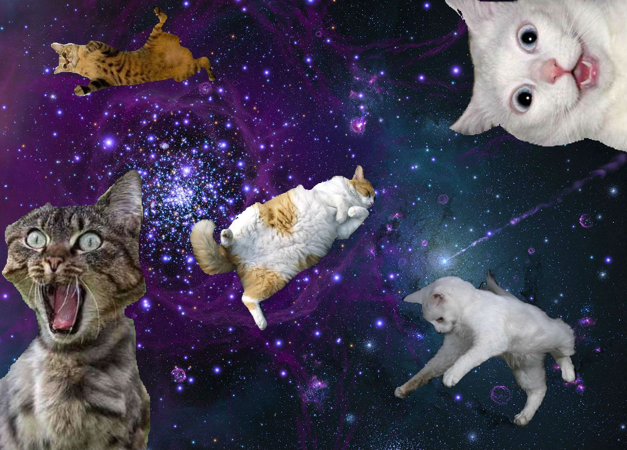 72 Best Free Hipster Galaxy Cat Wallpapers Wallpaperaccess