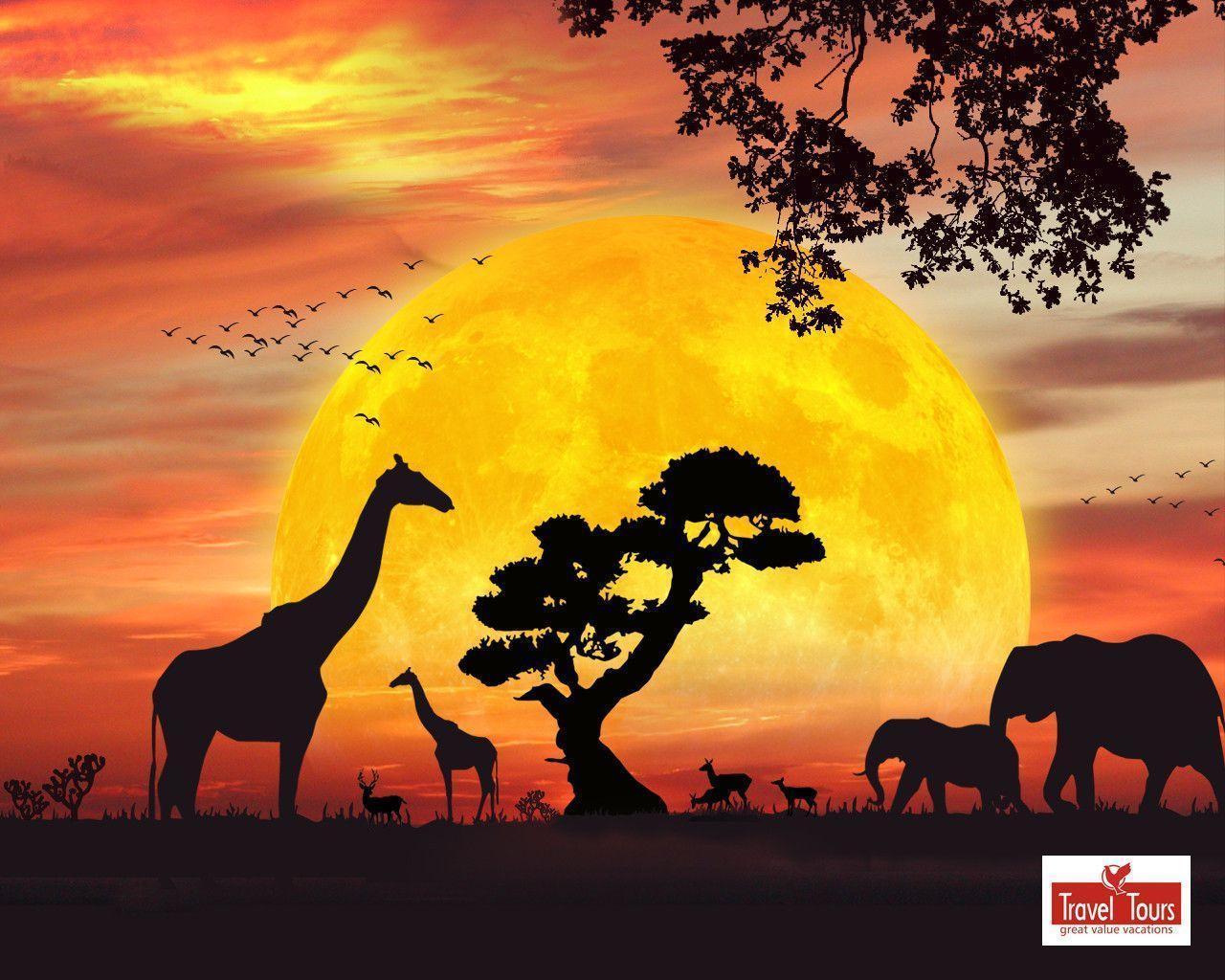 Safari Wallpapers Top Free Safari Backgrounds
