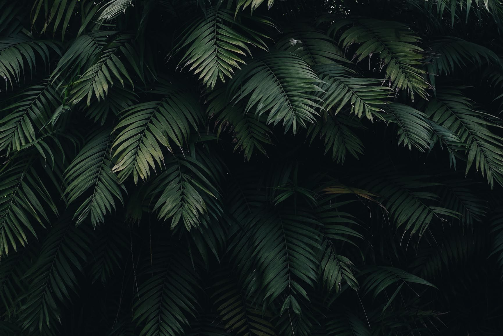 Tropical Jungle Wallpapers Top Free Tropical Jungle Backgrounds Wallpaperaccess