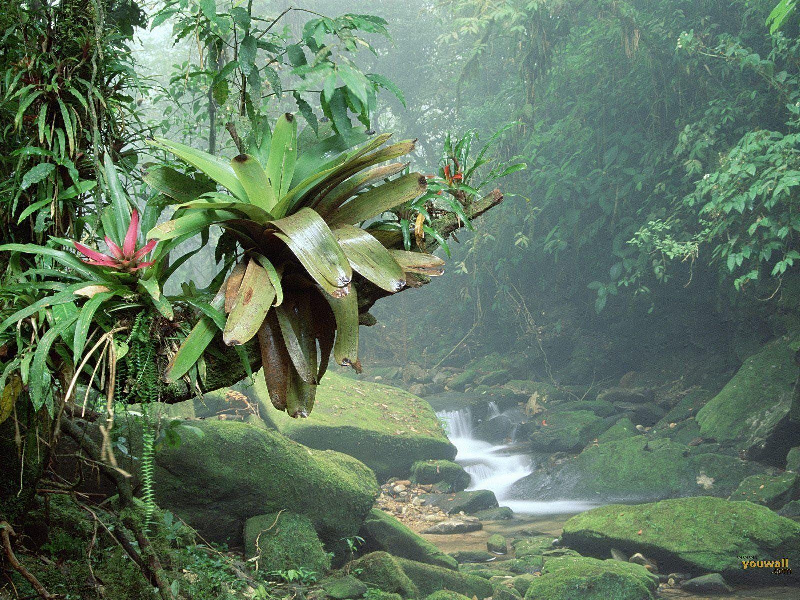 Tropical Jungle Wallpapers Top Free Tropical Jungle