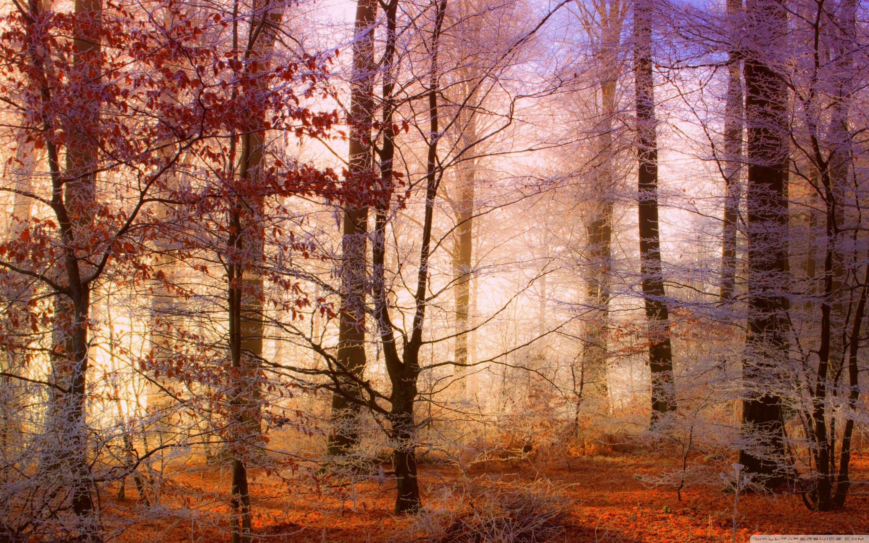 Misty Deer 4k Hd Desktop Wallpaper For 4k Ultra Hd Tv: Misty Forest Wallpapers