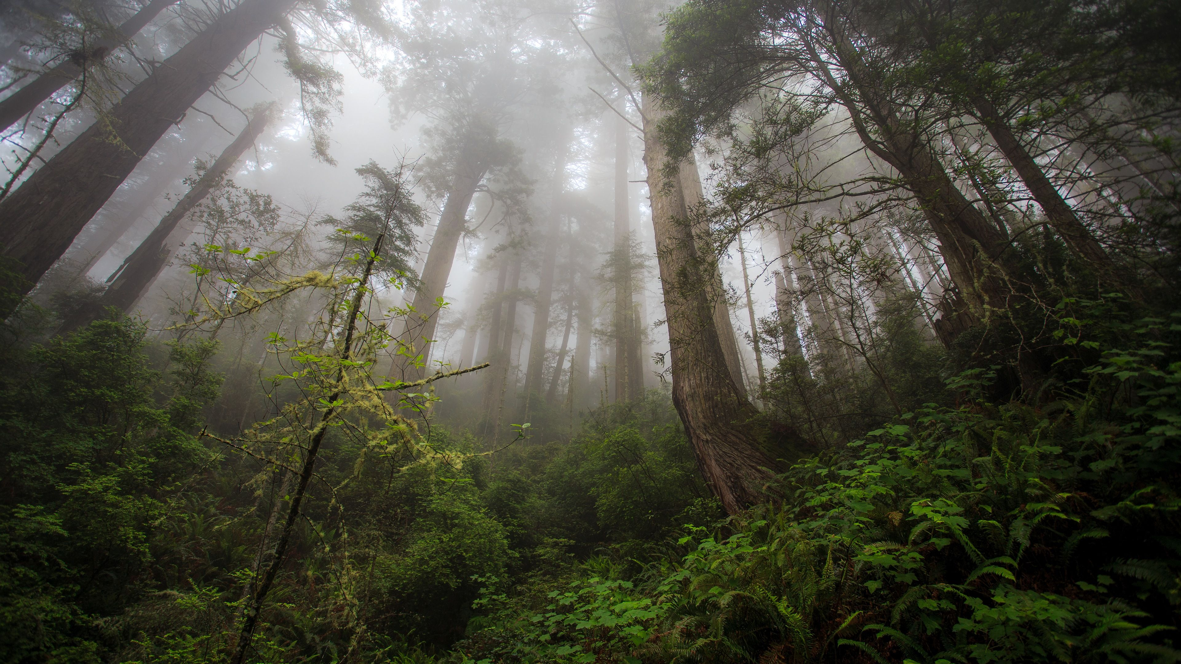 Forest Desktop Wallpapers Top Free Forest Desktop