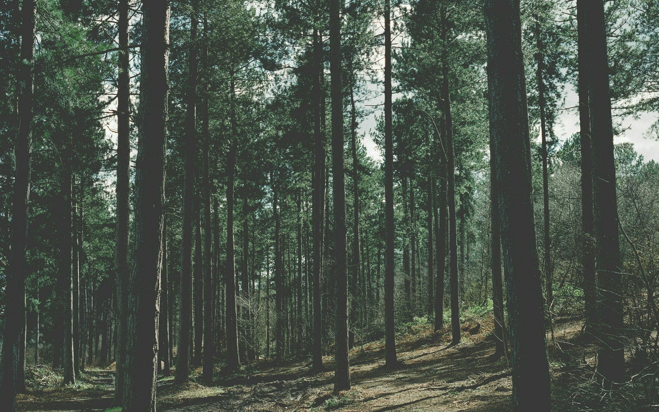 Aesthetic Forest Wallpapers Top Free Aesthetic Forest Backgrounds Wallpaperaccess