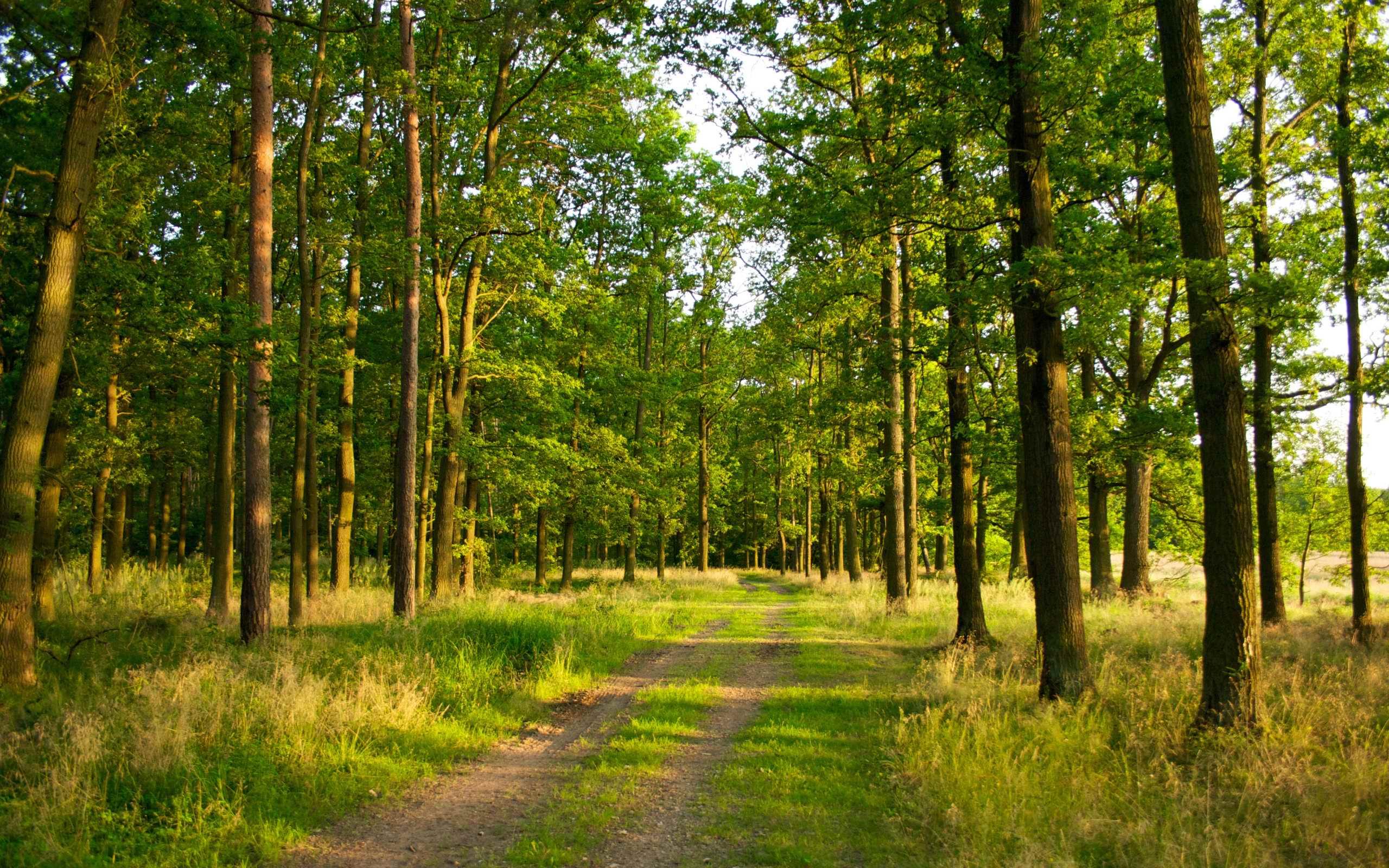 Forest Desktop Wallpapers Top Free Forest Desktop Backgrounds Wallpaperaccess