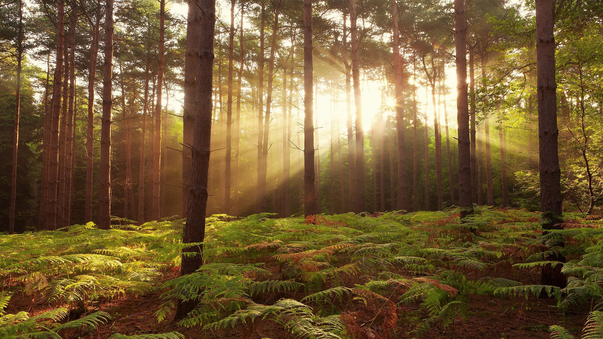 Forest Sunrise Wallpapers Top Free Forest Sunrise Backgrounds Wallpaperaccess