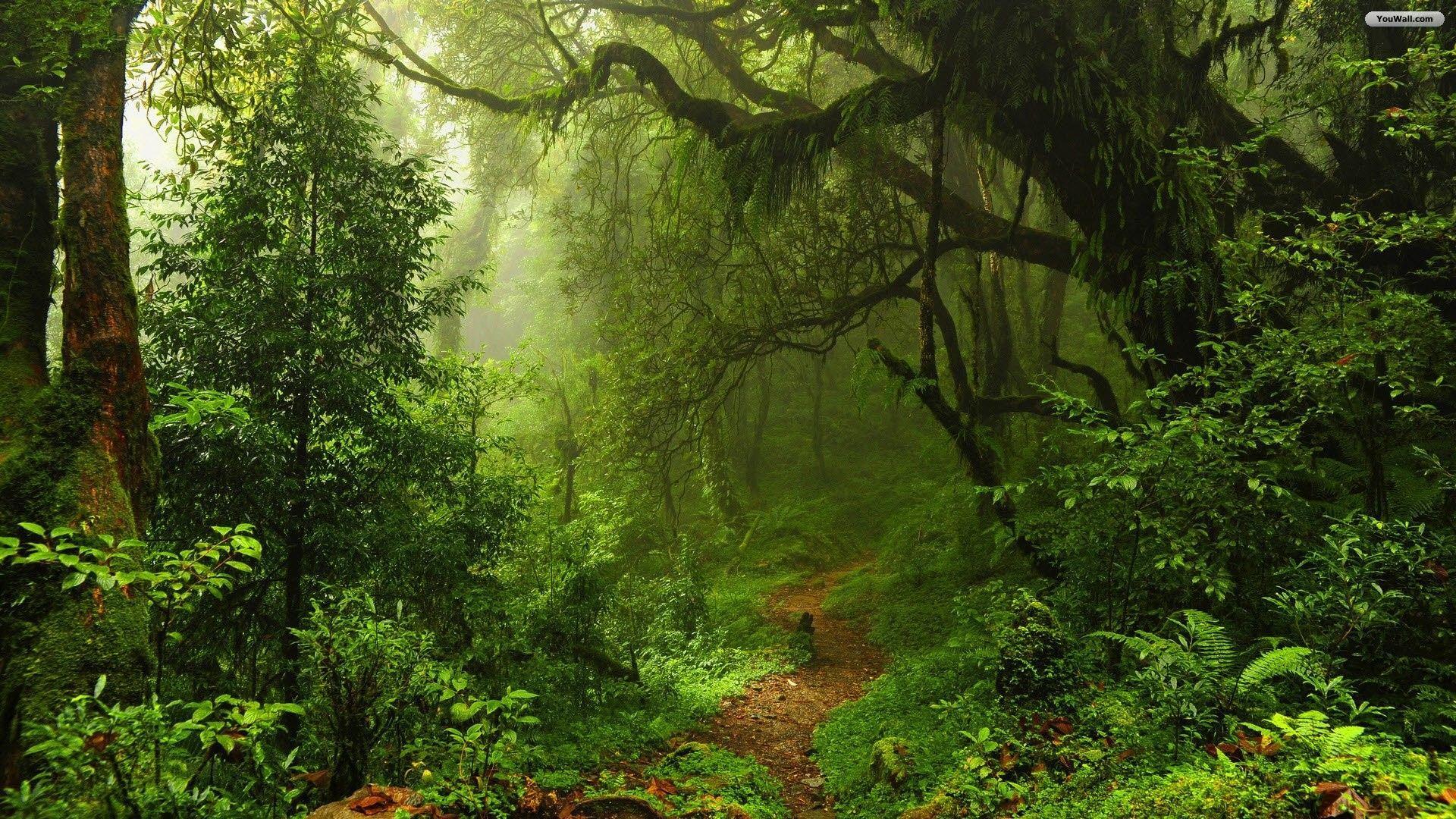 51 best free forest desktop wallpapers wallpaperaccess