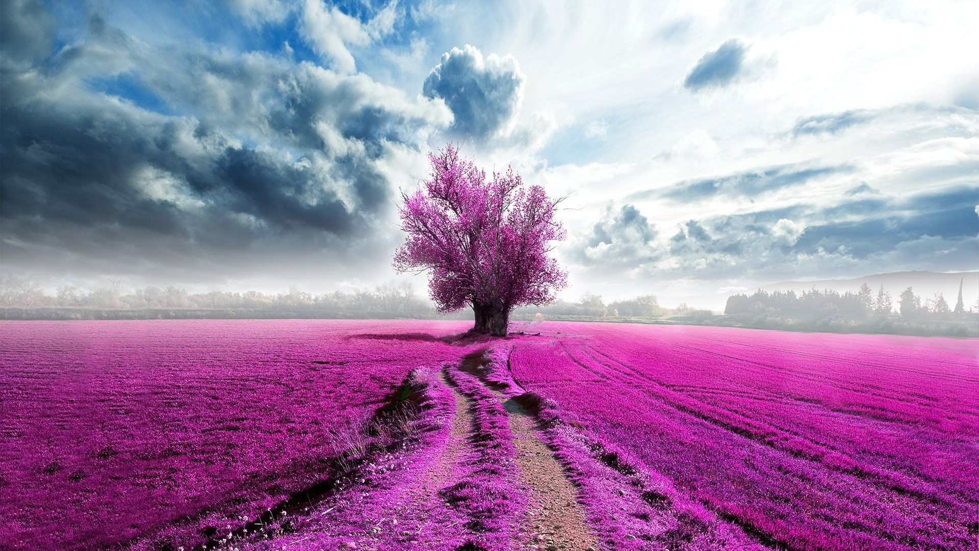 Pink Landscape Wallpapers Top Free Pink Landscape Backgrounds Wallpaperaccess