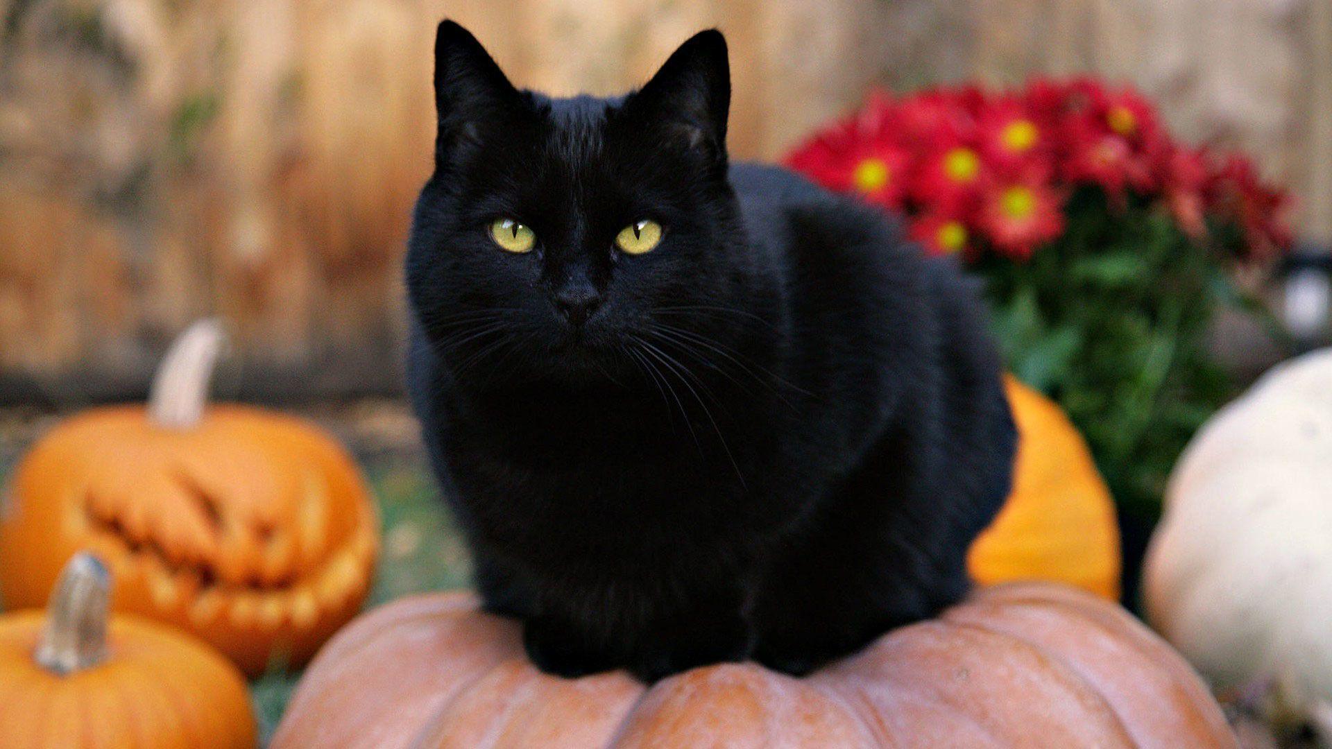 Halloween Cat Desktop Wallpapers Top Free Halloween Cat Desktop Backgrounds Wallpaperaccess