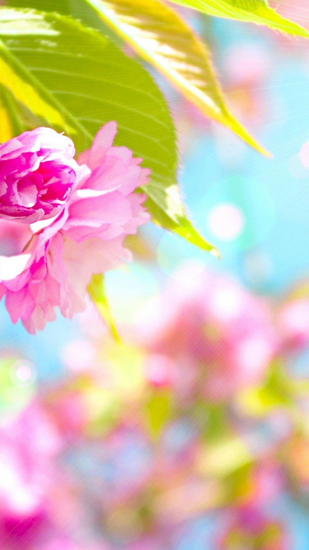 Cute Spring Iphone Wallpapers Top Free Cute Spring Iphone