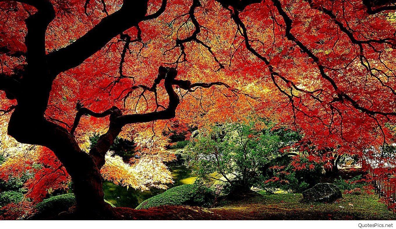 Hello Autumn Wallpapers Top Free Hello Autumn Backgrounds