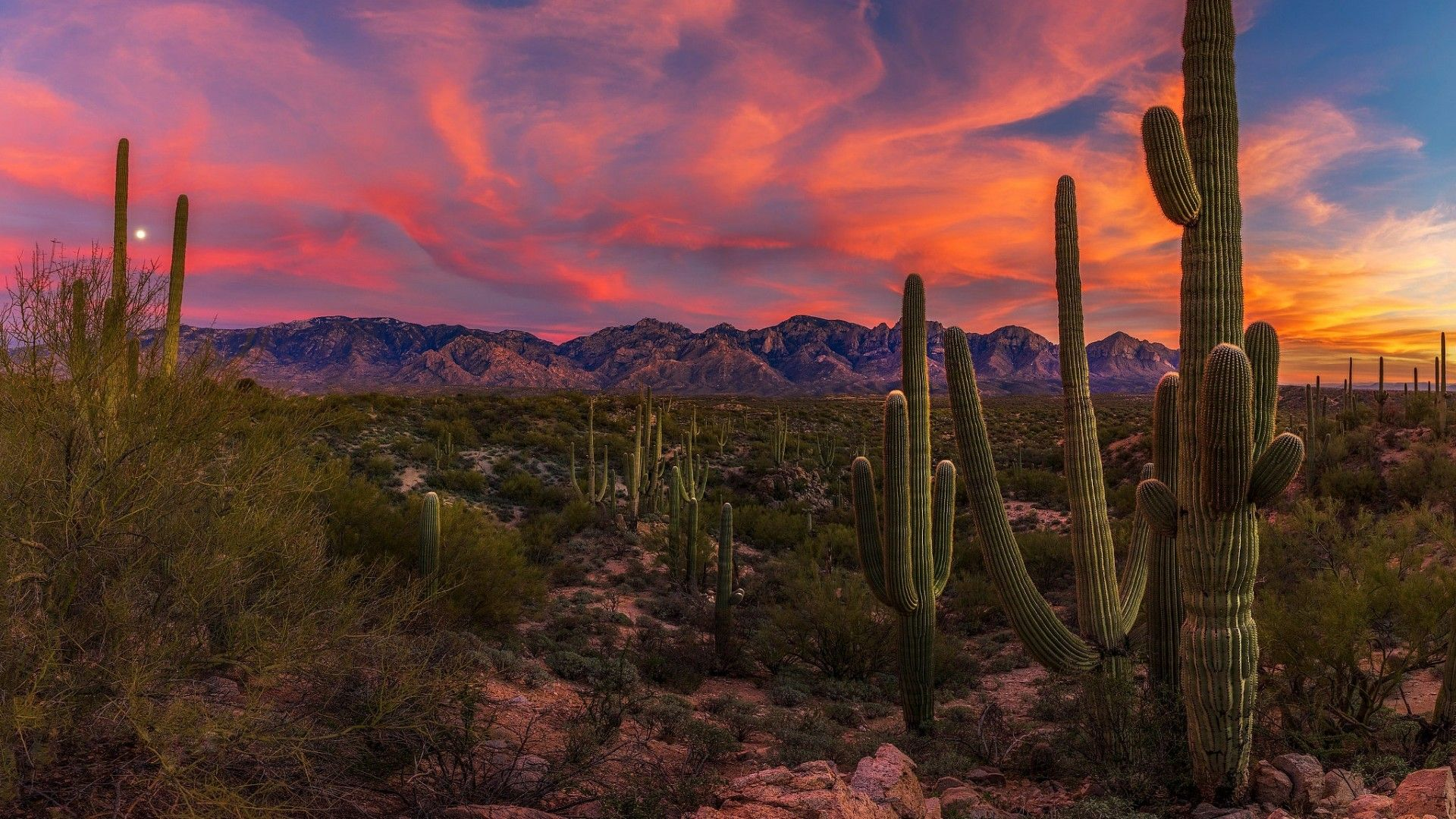 69 Best Free Arizona Wallpapers Wallpaperaccess