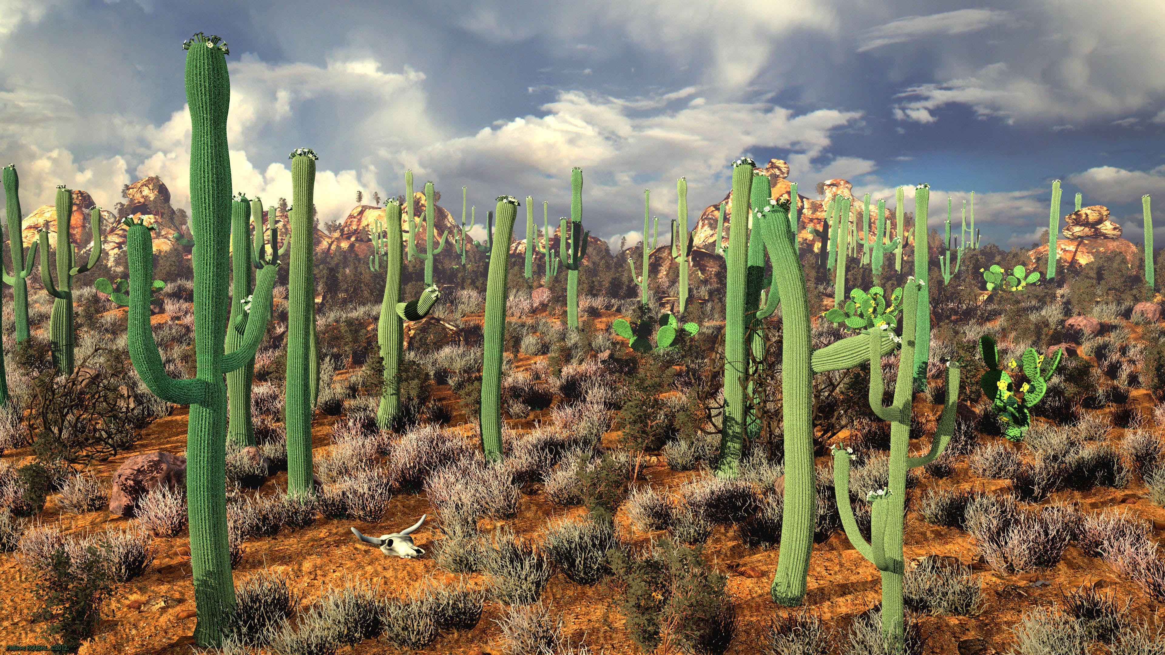 62 Best Free Desert Cactus Wallpapers Wallpaperaccess