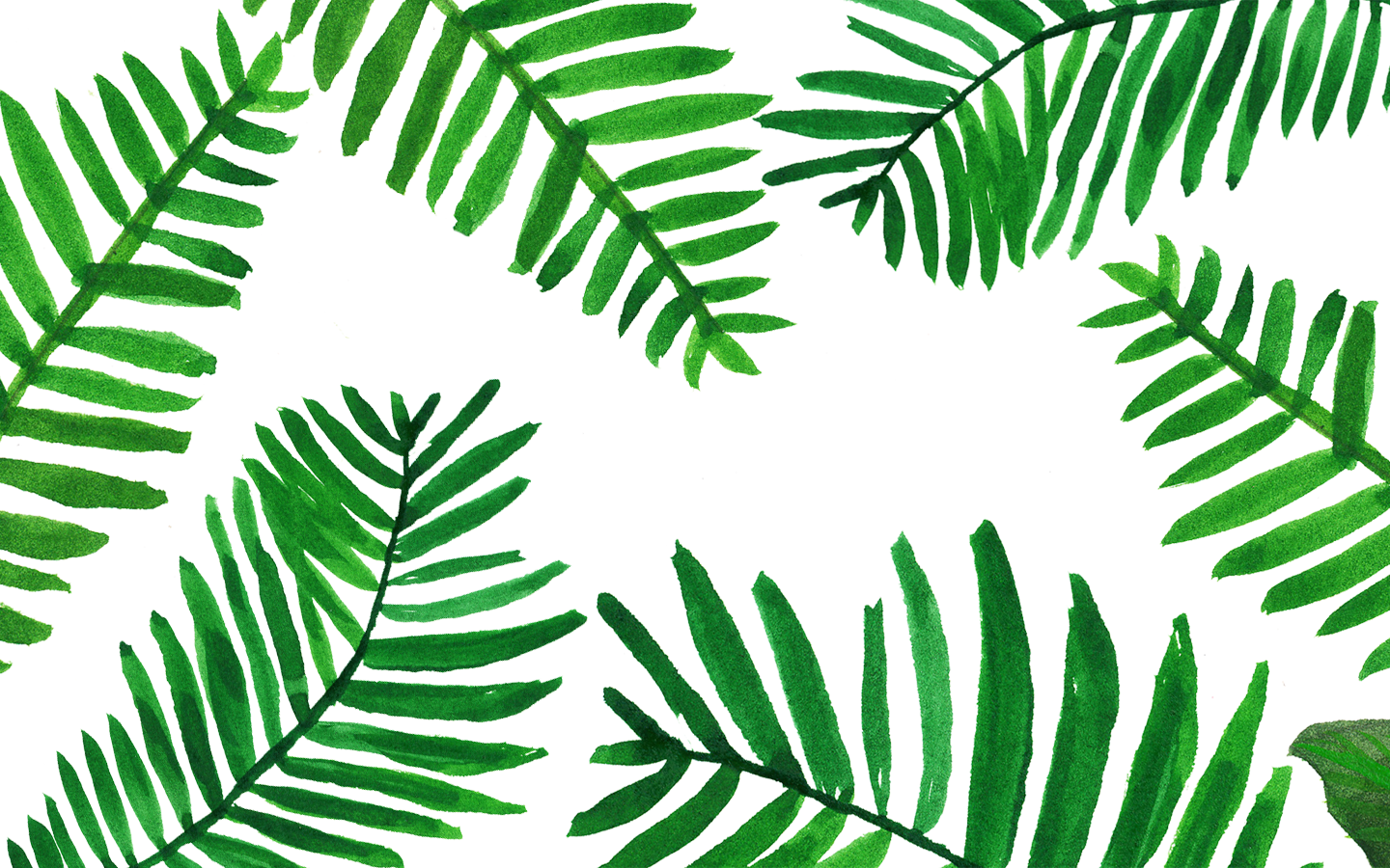 Palm Leaves Wallpapers Top Free Palm Leaves Backgrounds Wallpaperaccess