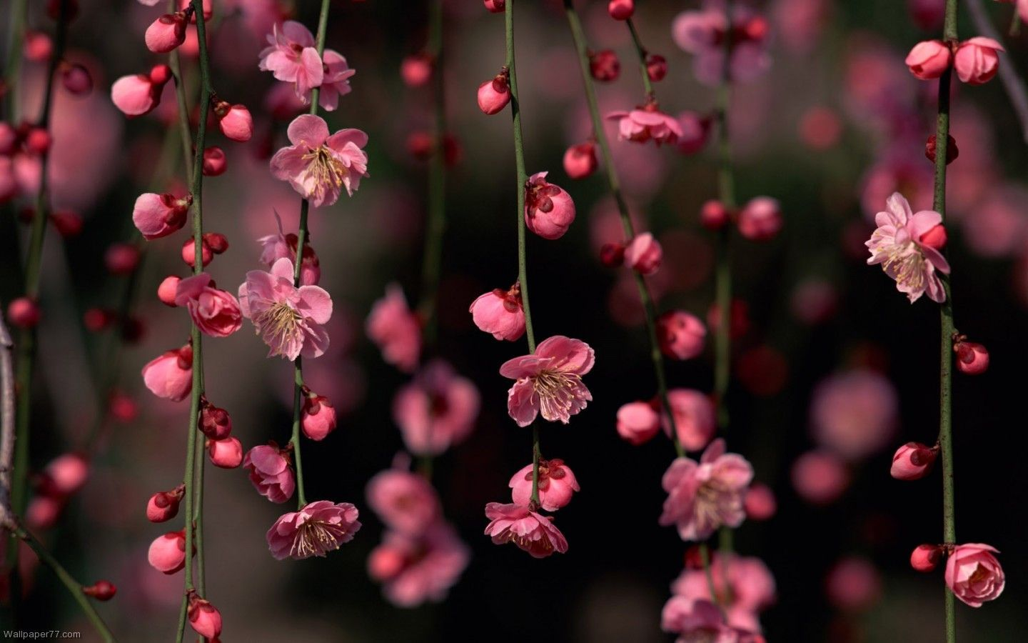 Floral Computer Wallpapers , Top Free Floral Computer