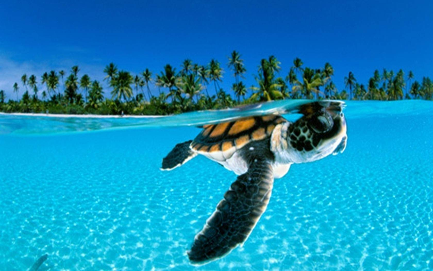 Turtle Wallpapers - Top Free Turtle