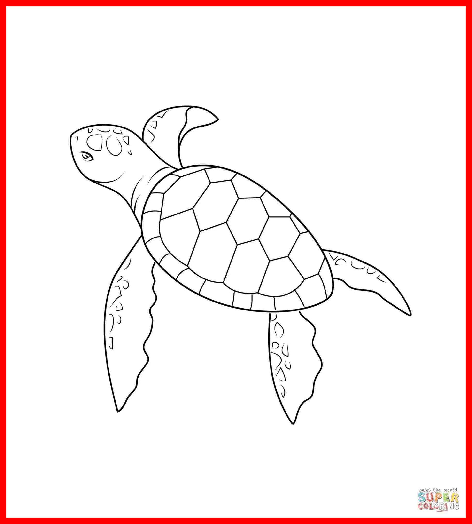 Cute Cartoon Turtle Wallpapers Top Free Cute Cartoon Turtle