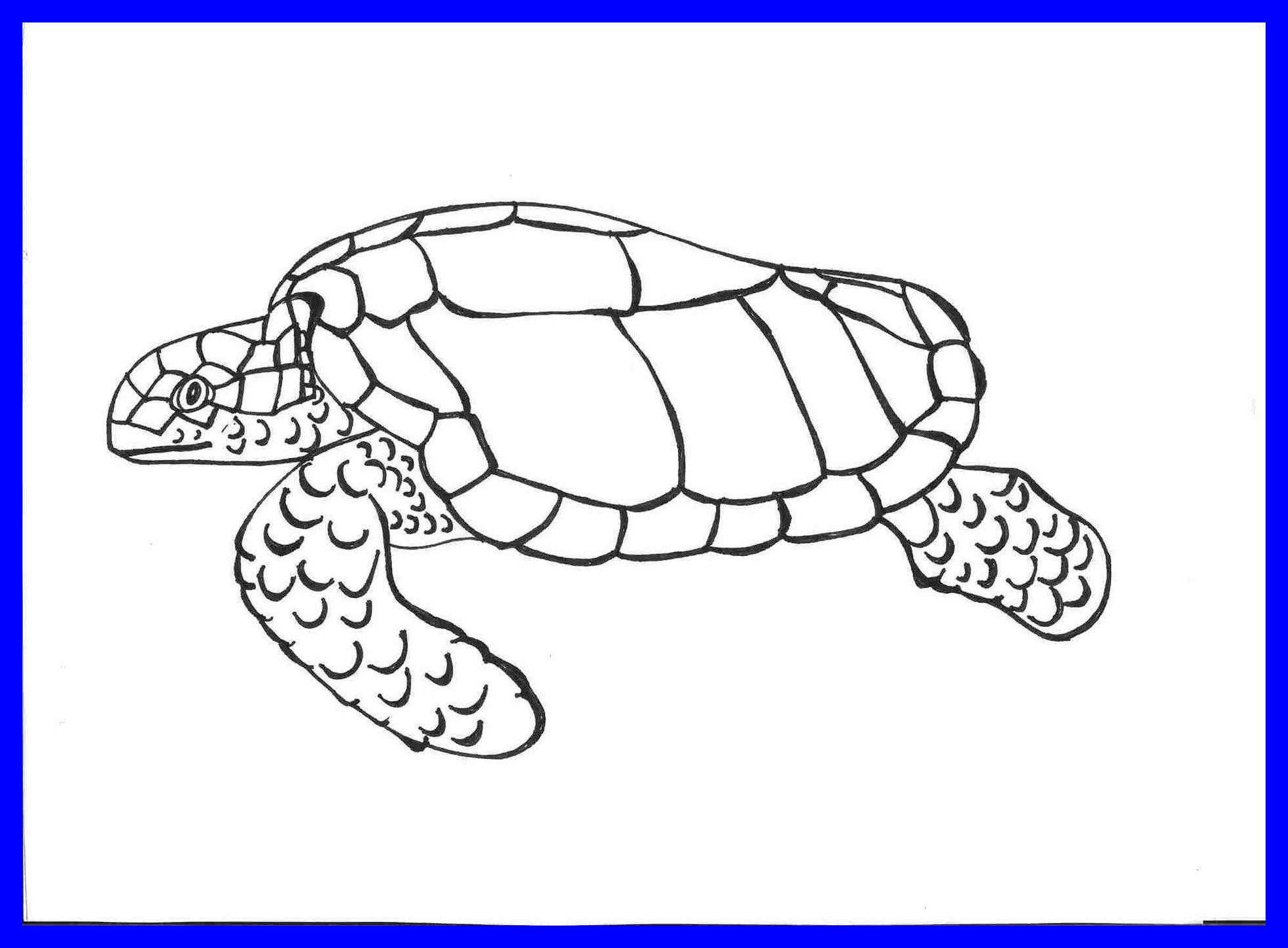 Cute Cartoon Turtle Wallpapers Top Free Cute Cartoon Turtle