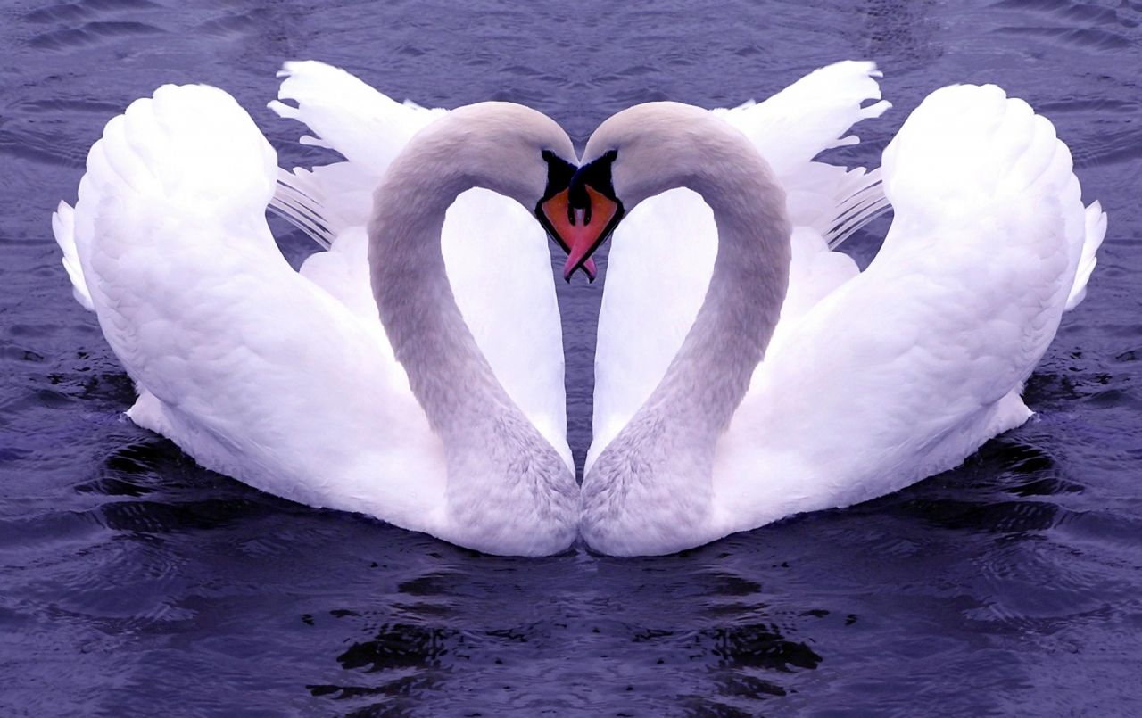 Love Birds Wallpapers Top Free Love Birds Backgrounds