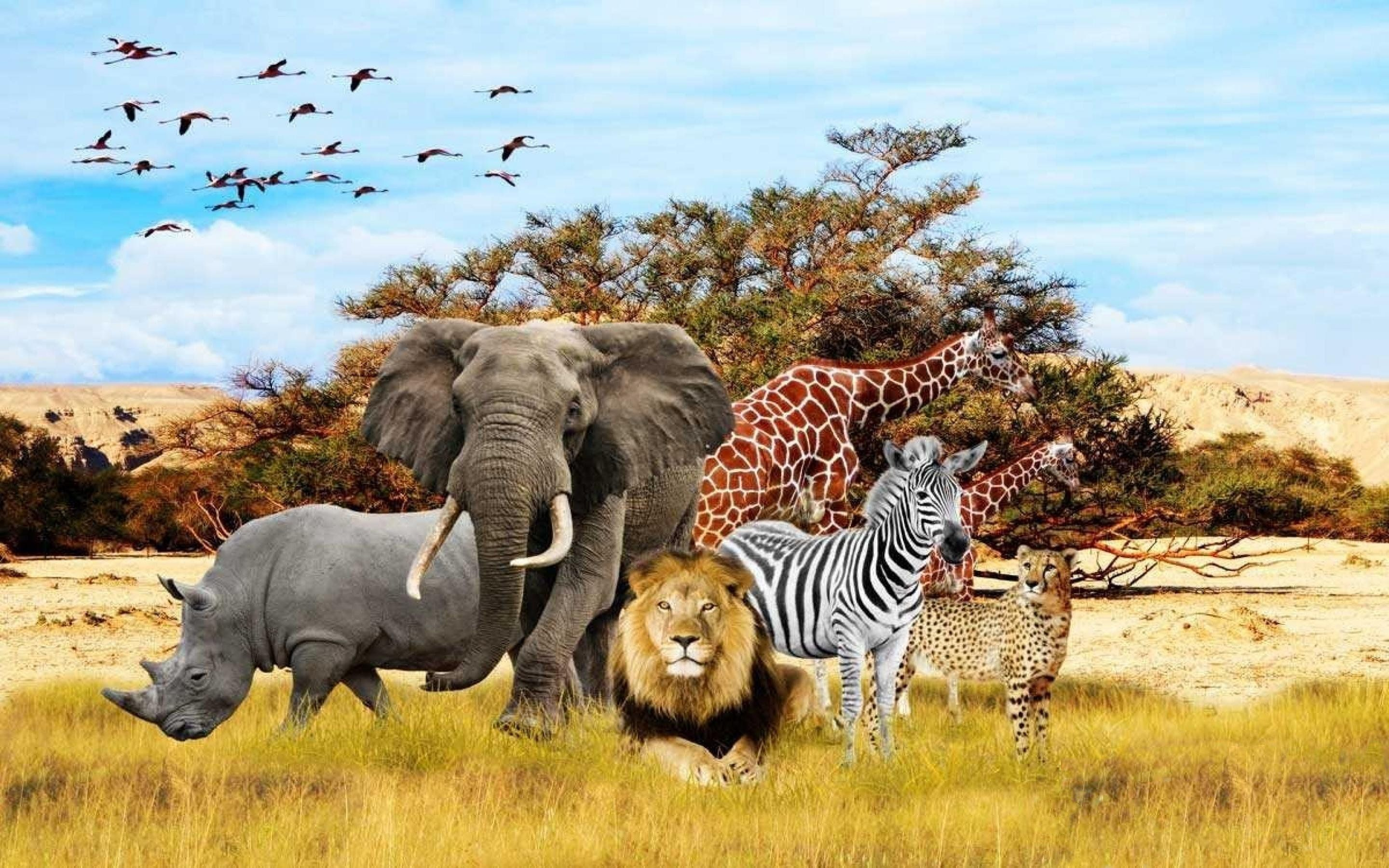 African Animals Wallpapers - Top Free African Animals Backgrounds -  WallpaperAccess