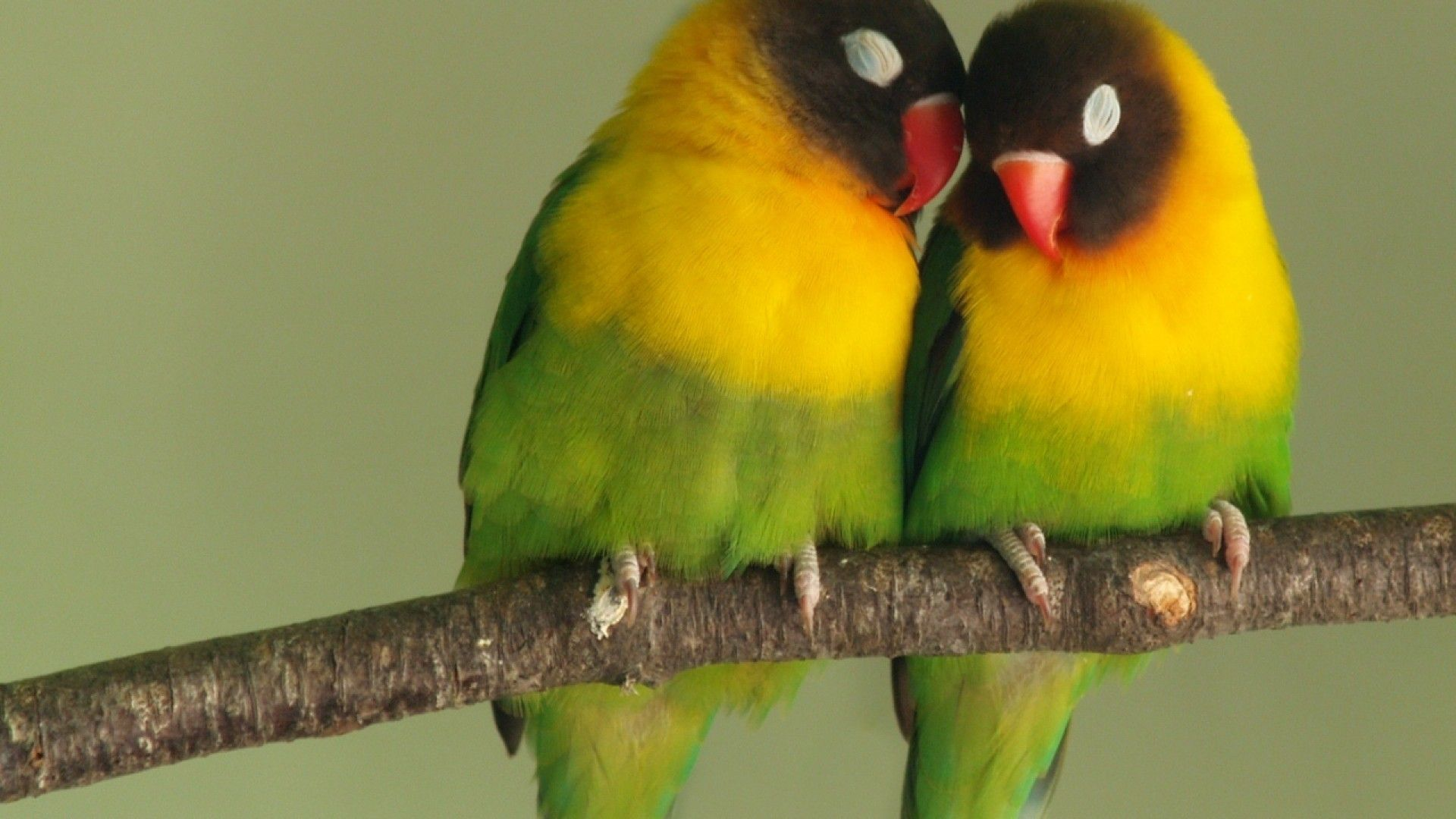 African Love Wallpapers Top Free African Love Backgrounds