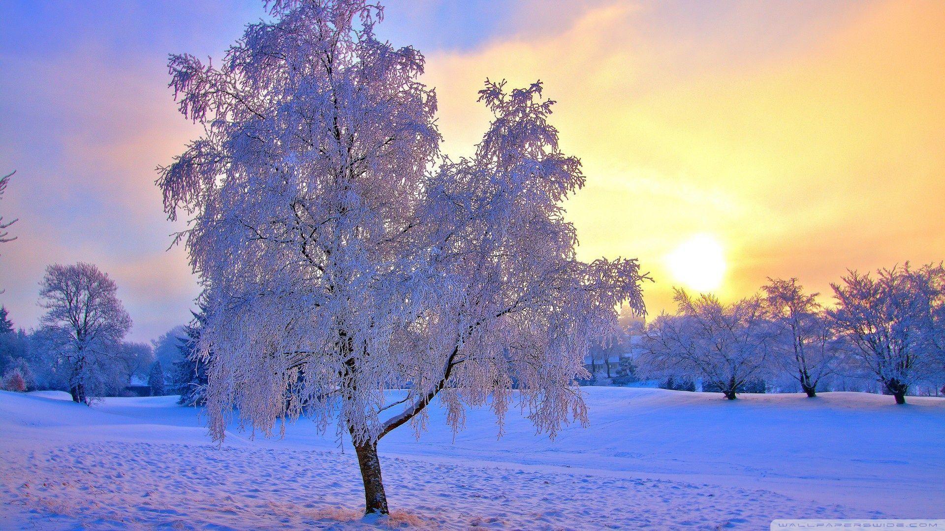 Winter Sunset Desktop Wallpapers Top Free Winter Sunset Desktop Backgrounds Wallpaperaccess