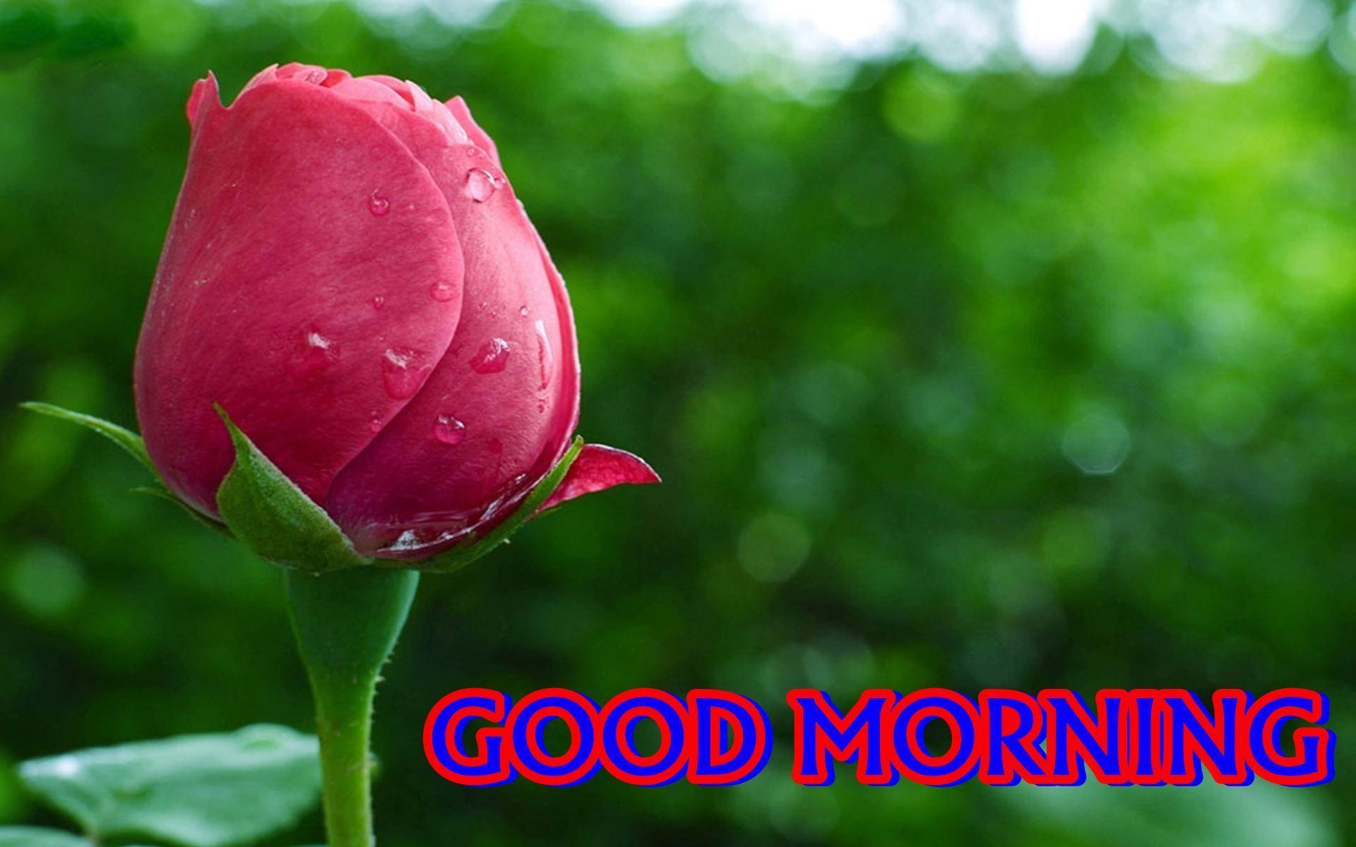 Morning Desktop Wallpapers Top Free Morning Desktop Backgrounds Wallpaperaccess