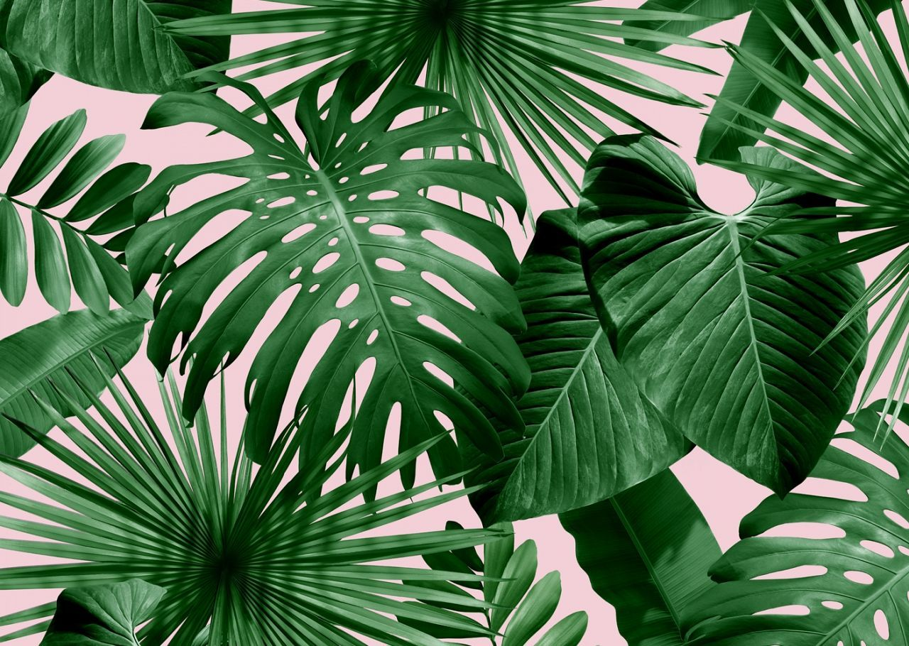 Tropical Leaves Desktop Wallpapers Top Free Tropical Leaves Desktop Backgrounds Wallpaperaccess Digital drawing tropical leaves for decoration. tropical leaves desktop wallpapers