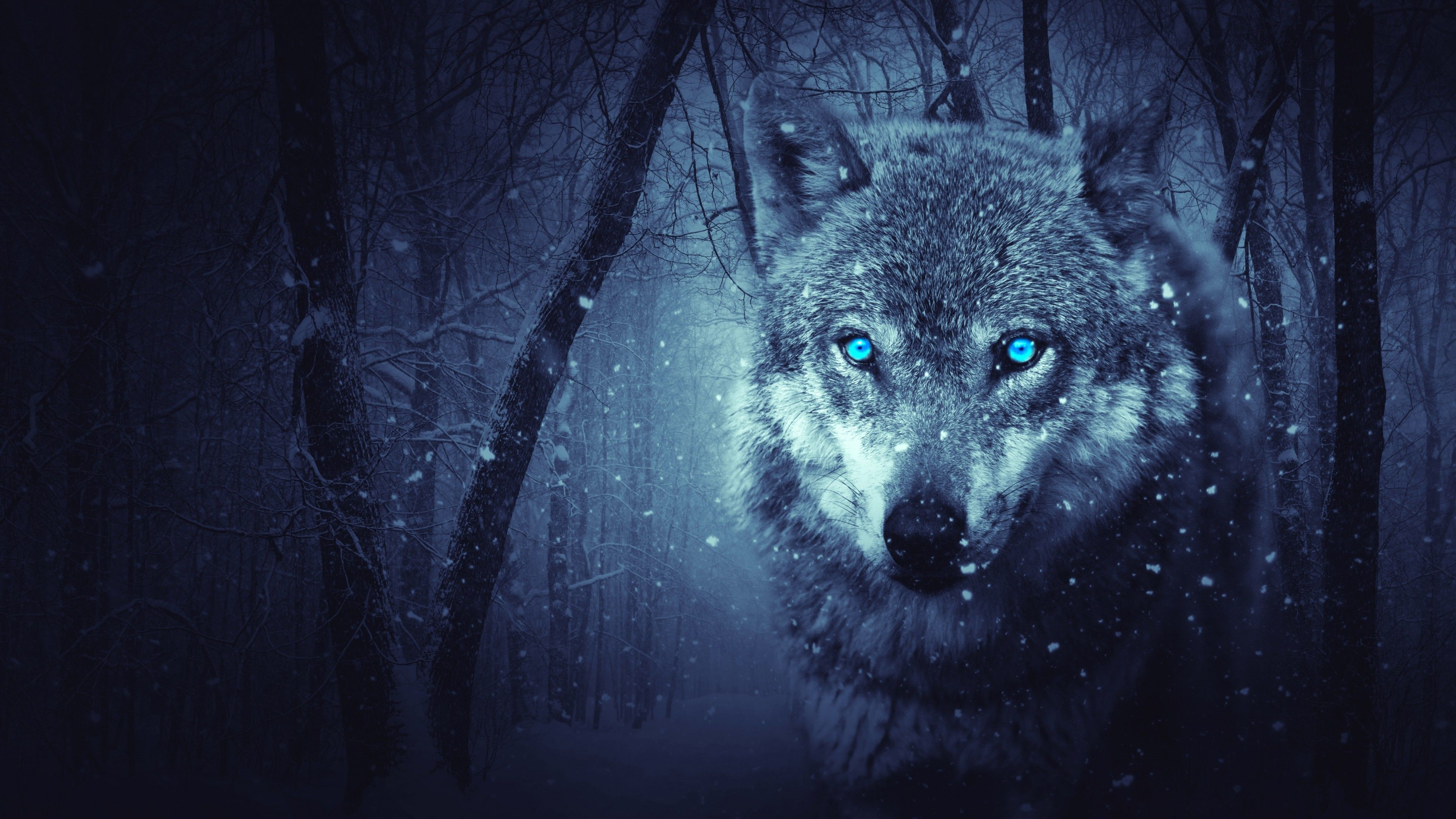 Blue Wolf Wallpapers Top Free Blue Wolf Backgrounds