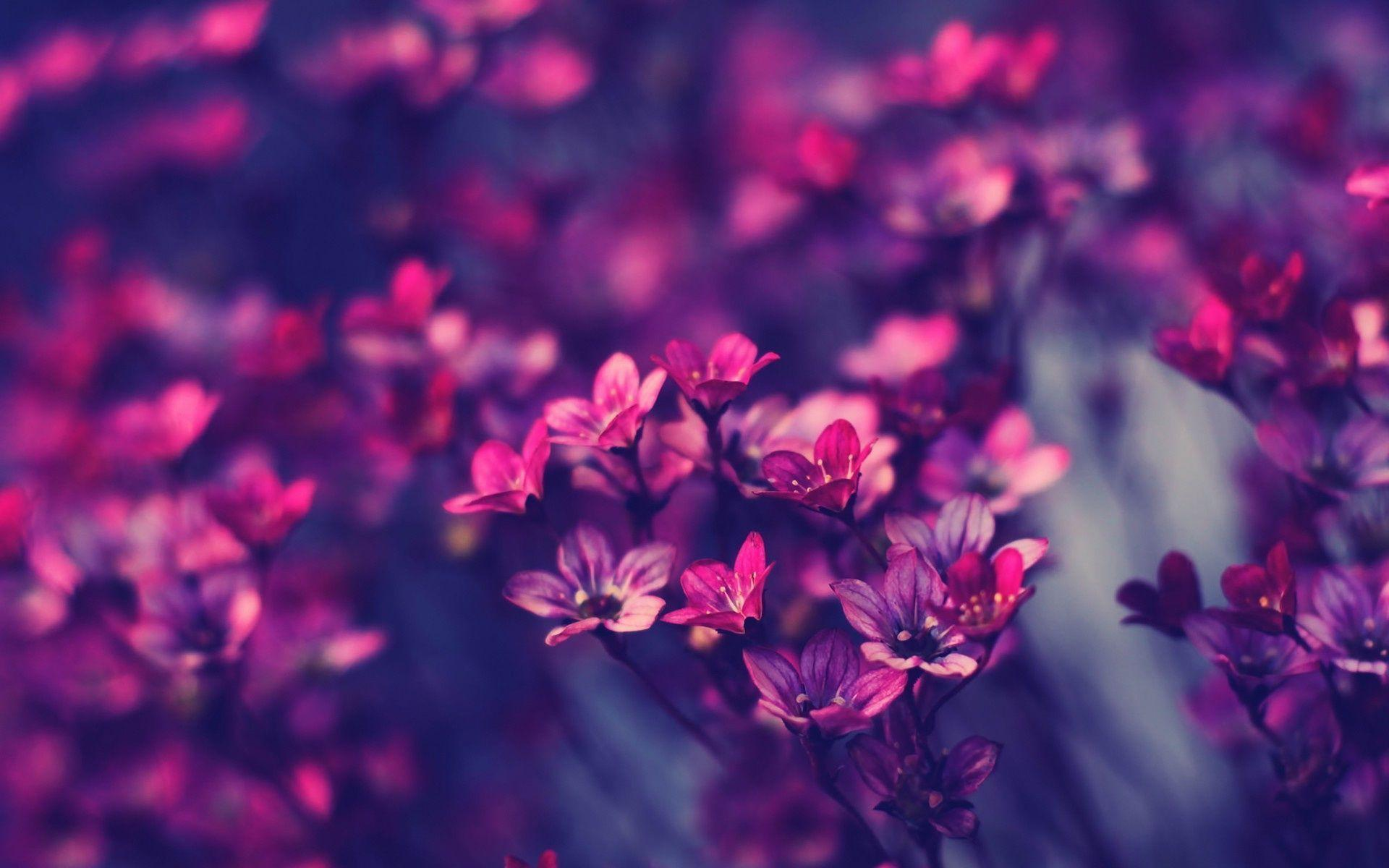 Purple Flower Desktop Wallpapers Top Free Purple Flower Desktop Backgrounds Wallpaperaccess