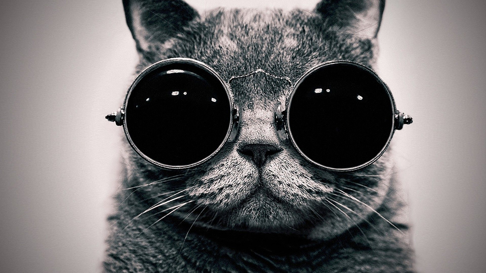 Hipster Cat Wallpapers Top Free Hipster Cat Backgrounds Wallpaperaccess
