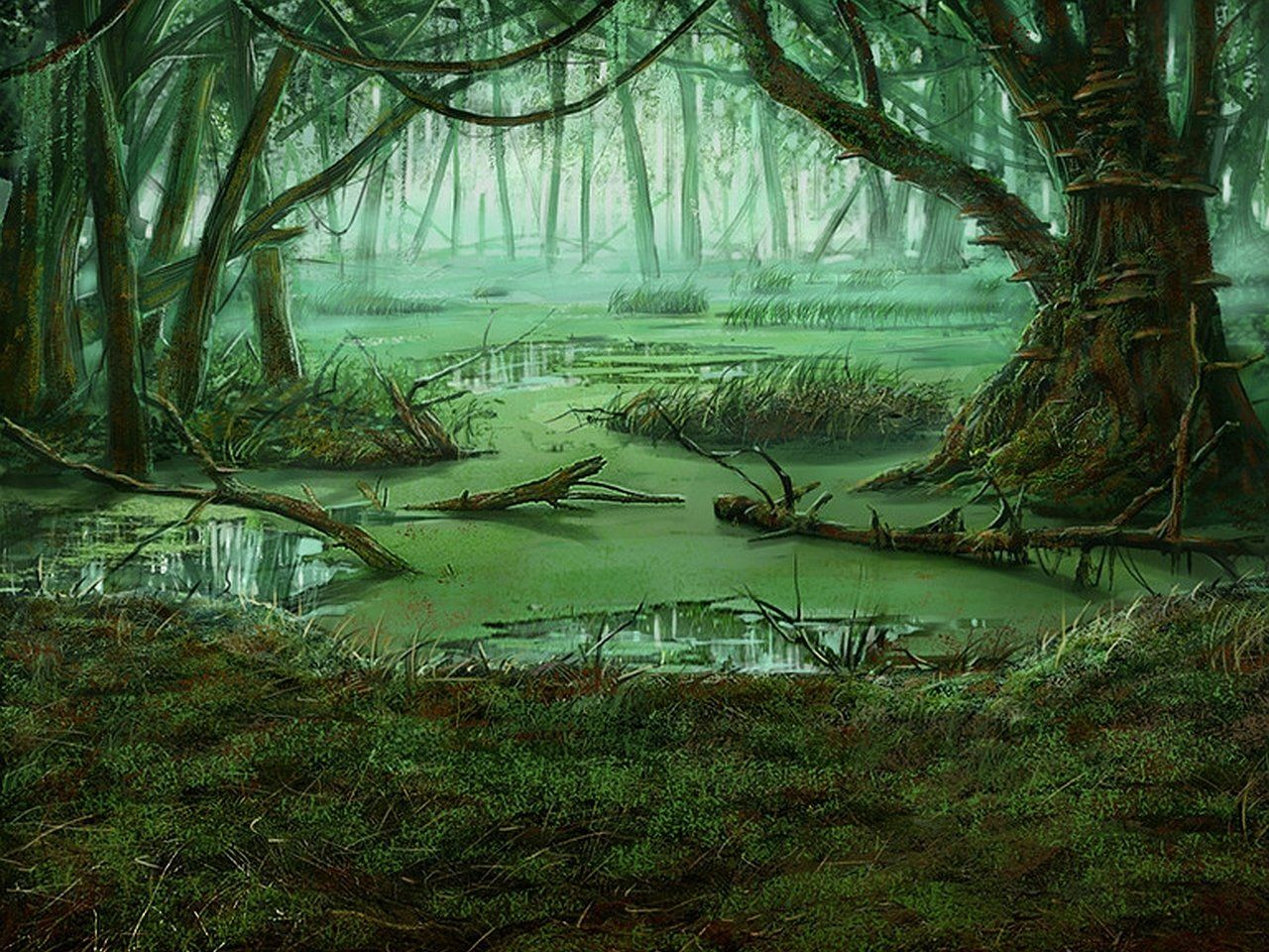 Swamp Wallpapers Top Free Swamp Backgrounds Wallpaperaccess