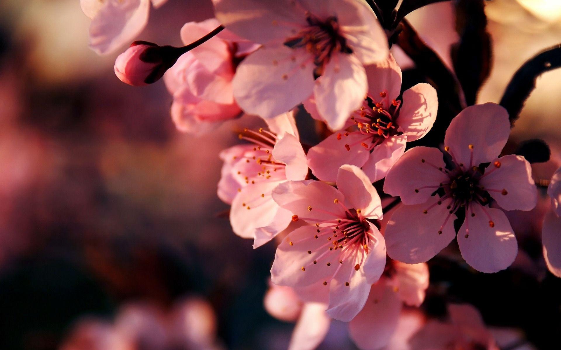 Flower Desktop Wallpapers Top Free Flower Desktop Backgrounds Wallpaperaccess