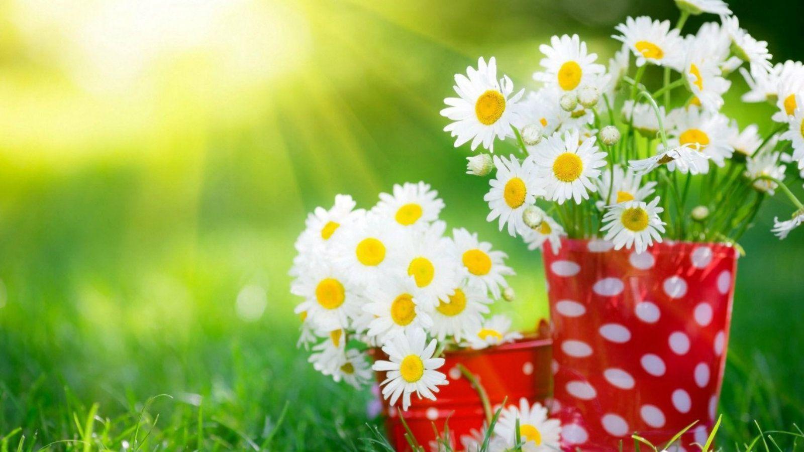 Nature Flower Wallpaper Hd For Desktop Free Flowers Healthy